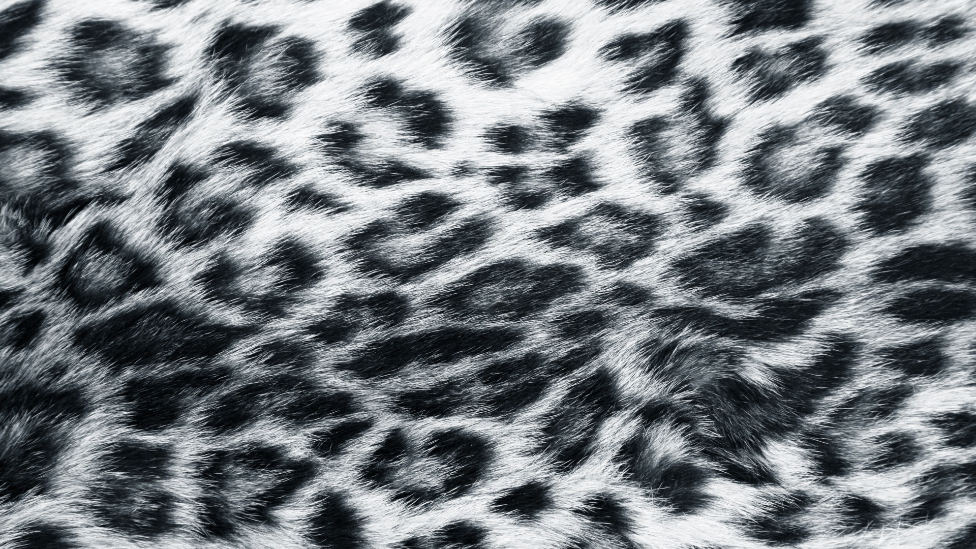 Res: 1920x1080, Leopard Skin Wallpapers 12 - 1920 X 1080