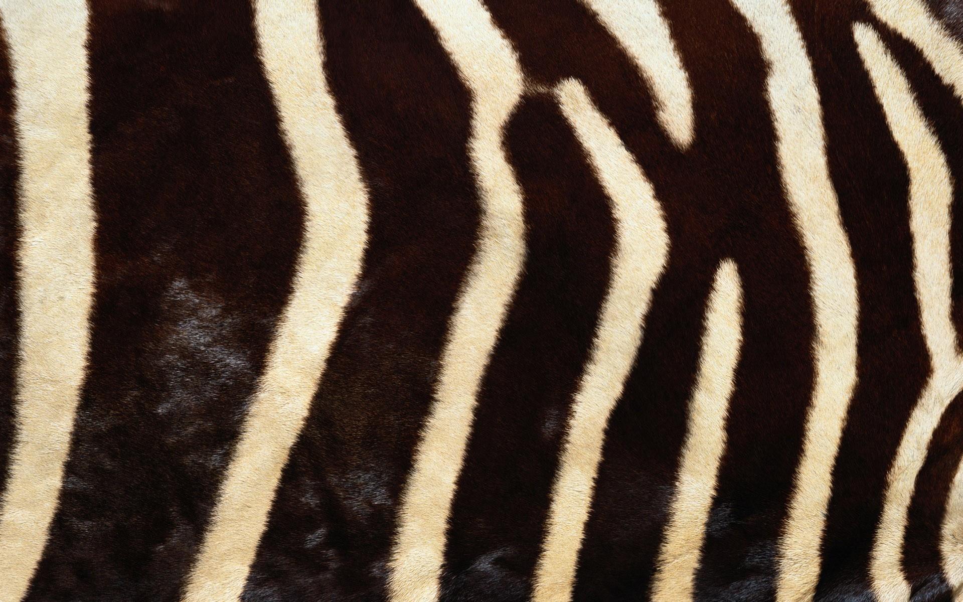Res: 1920x1200, Zebra Fur Wallpaper