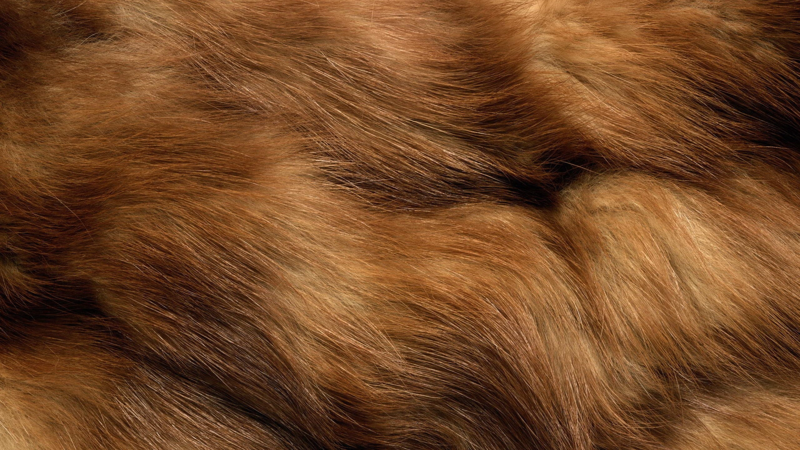Res: 2560x1440,  Wallpaper fur, spotted, animal, clothing
