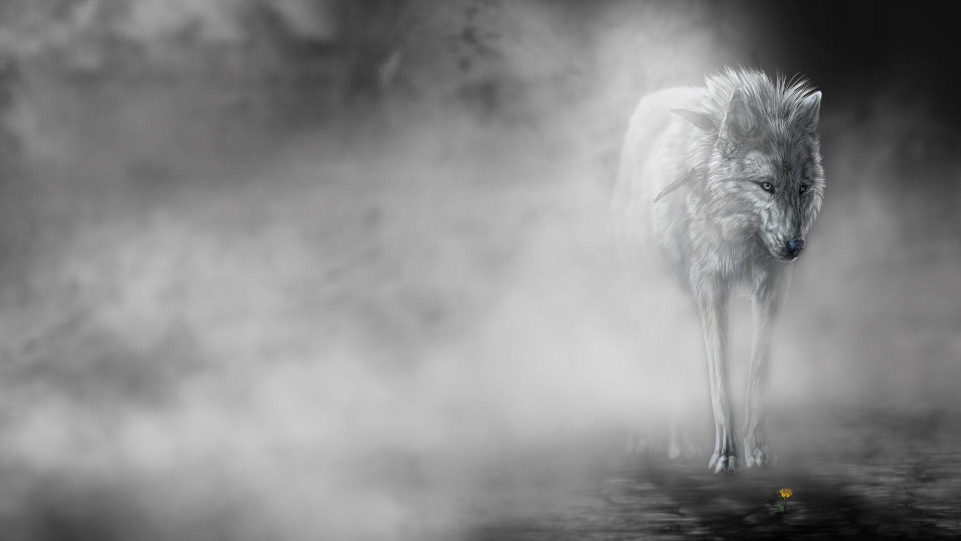 Res: 1920x1080, Emotion Tag - Mood Art Wolf Mist Predator Fog Wolves Fantasy Animals  Emotion Funny Animal Hd