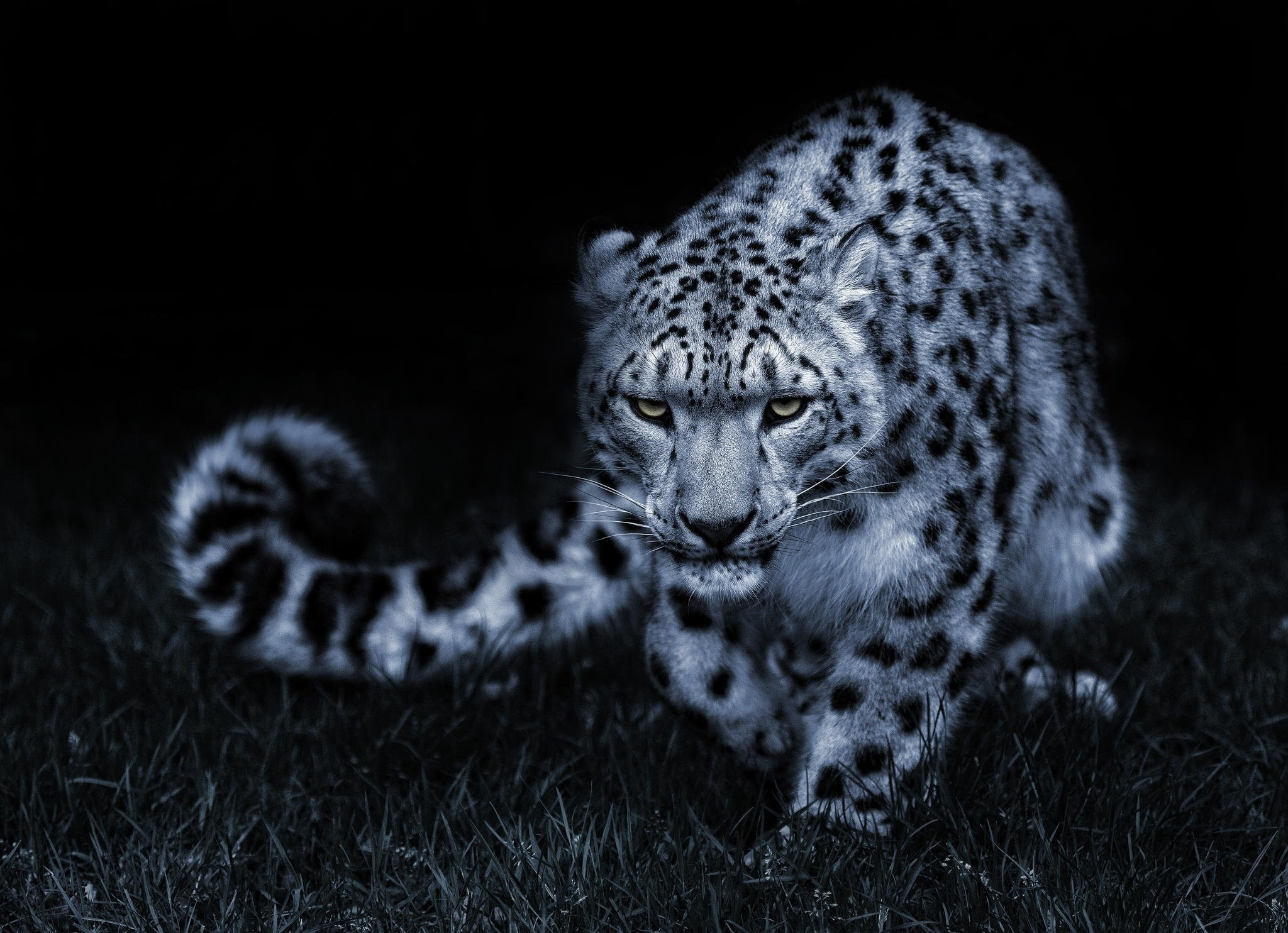 Res: 2048x1484, Snow Leopard Wallpapers Wallpapercraft