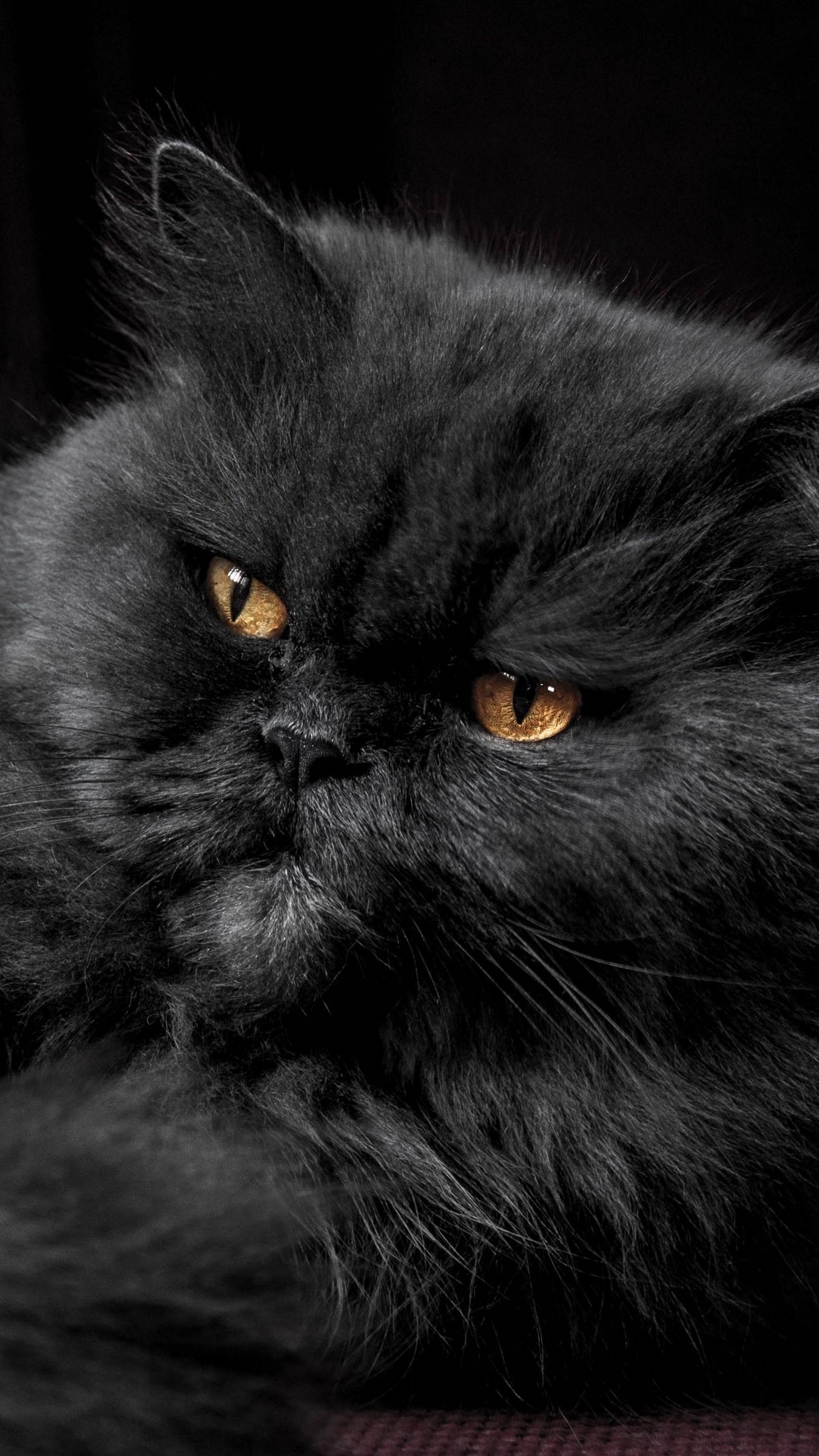 Res: 1350x2400,  Wallpaper cat, furry, gray