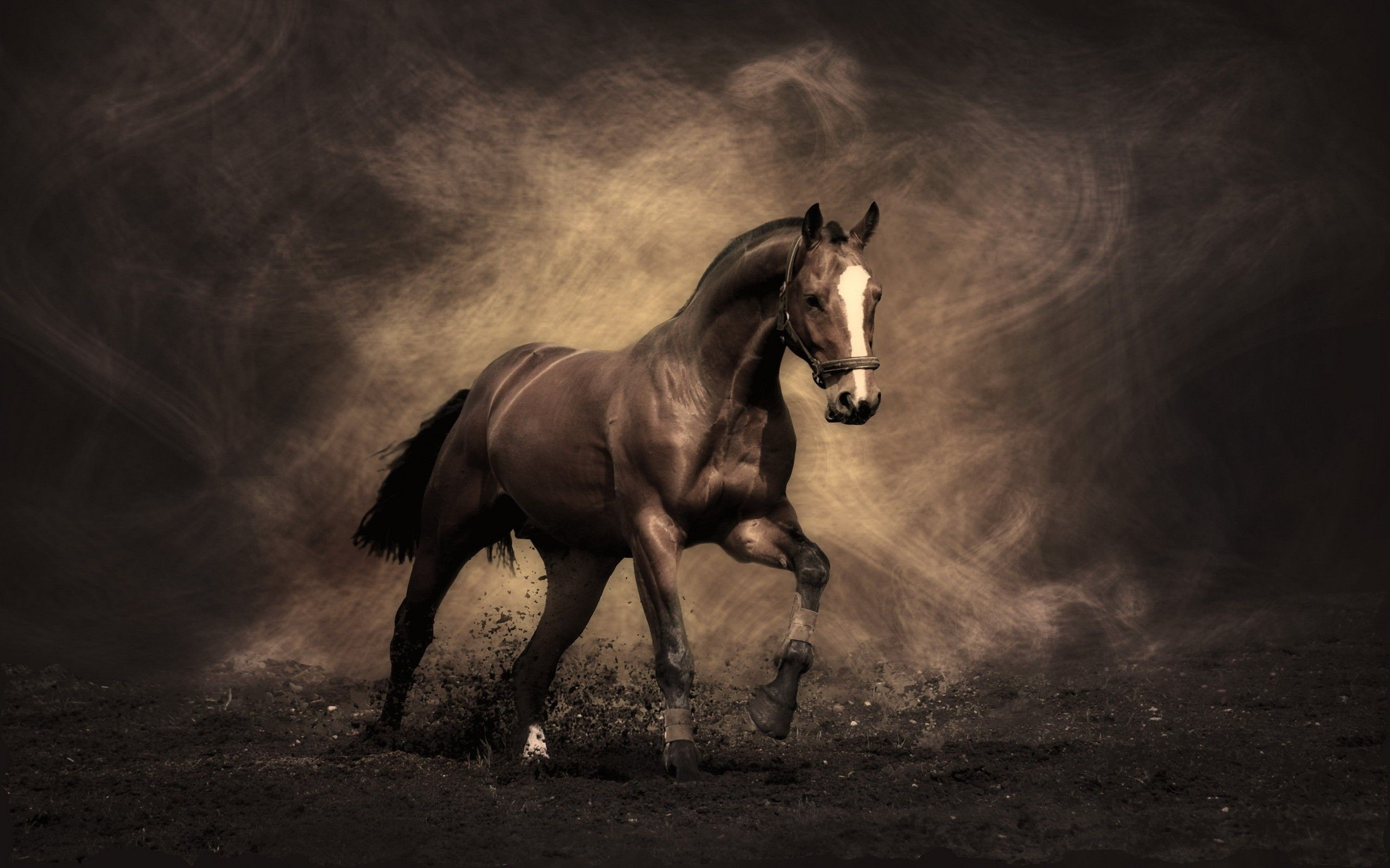 Res: 2560x1600, Horse Wallpapers - Full HD wallpaper search