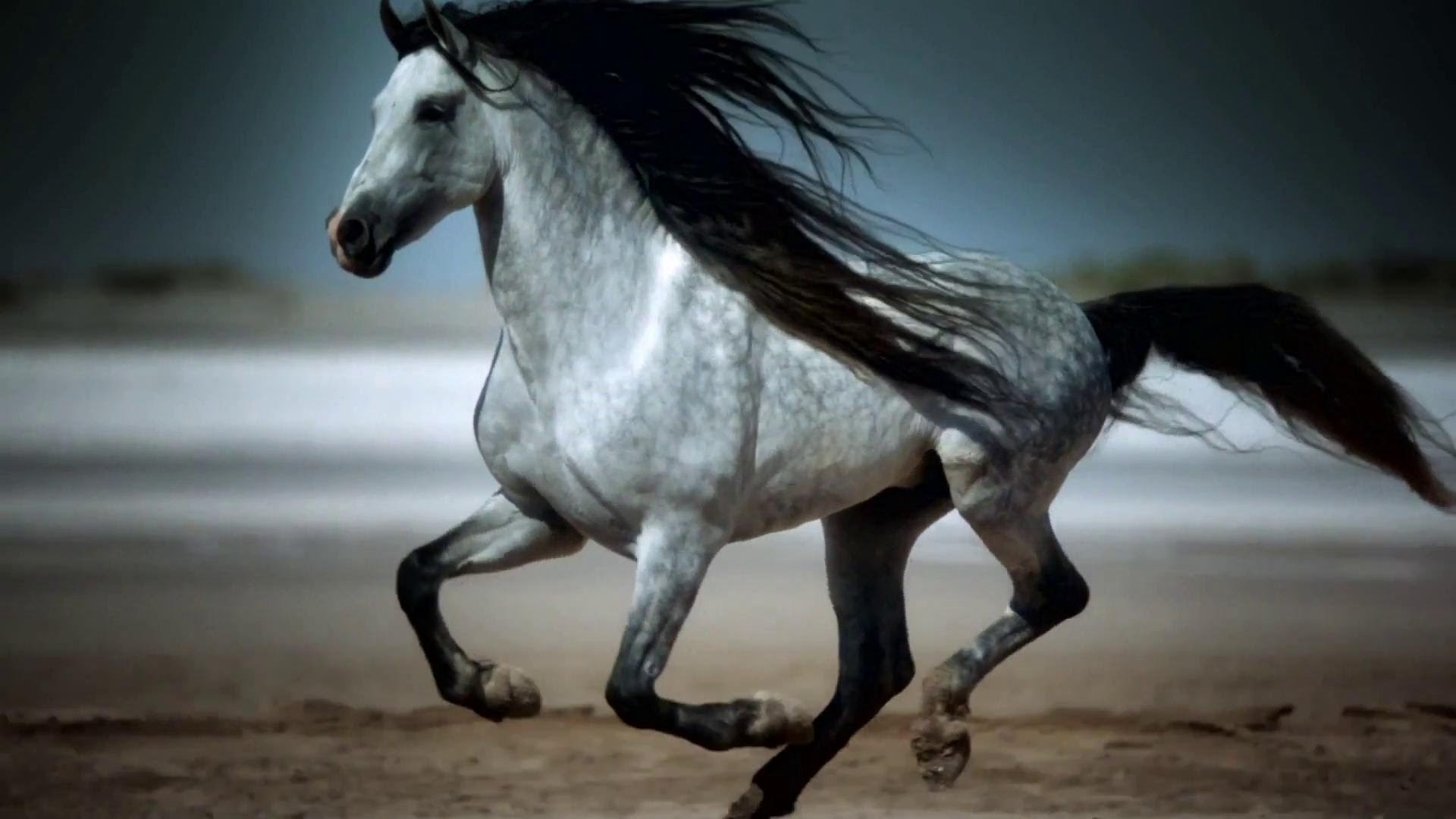 Res: 1920x1080, Awesome Indian Horses Pics 1080 Pixel Full Hd Wallpaper Images About News  For Mobile Phones