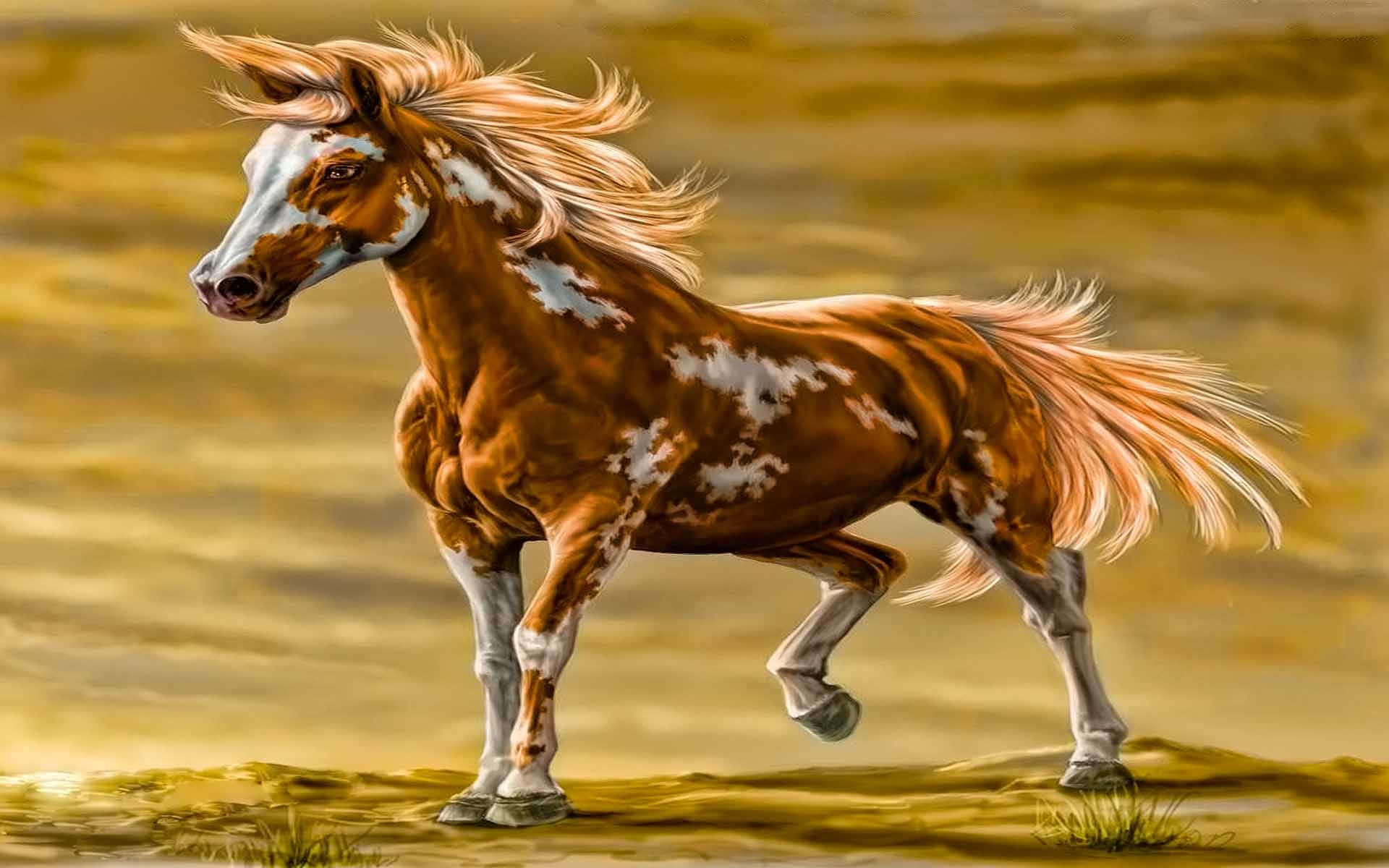 Res: 1920x1200, Paint Horse Wallpaper HD