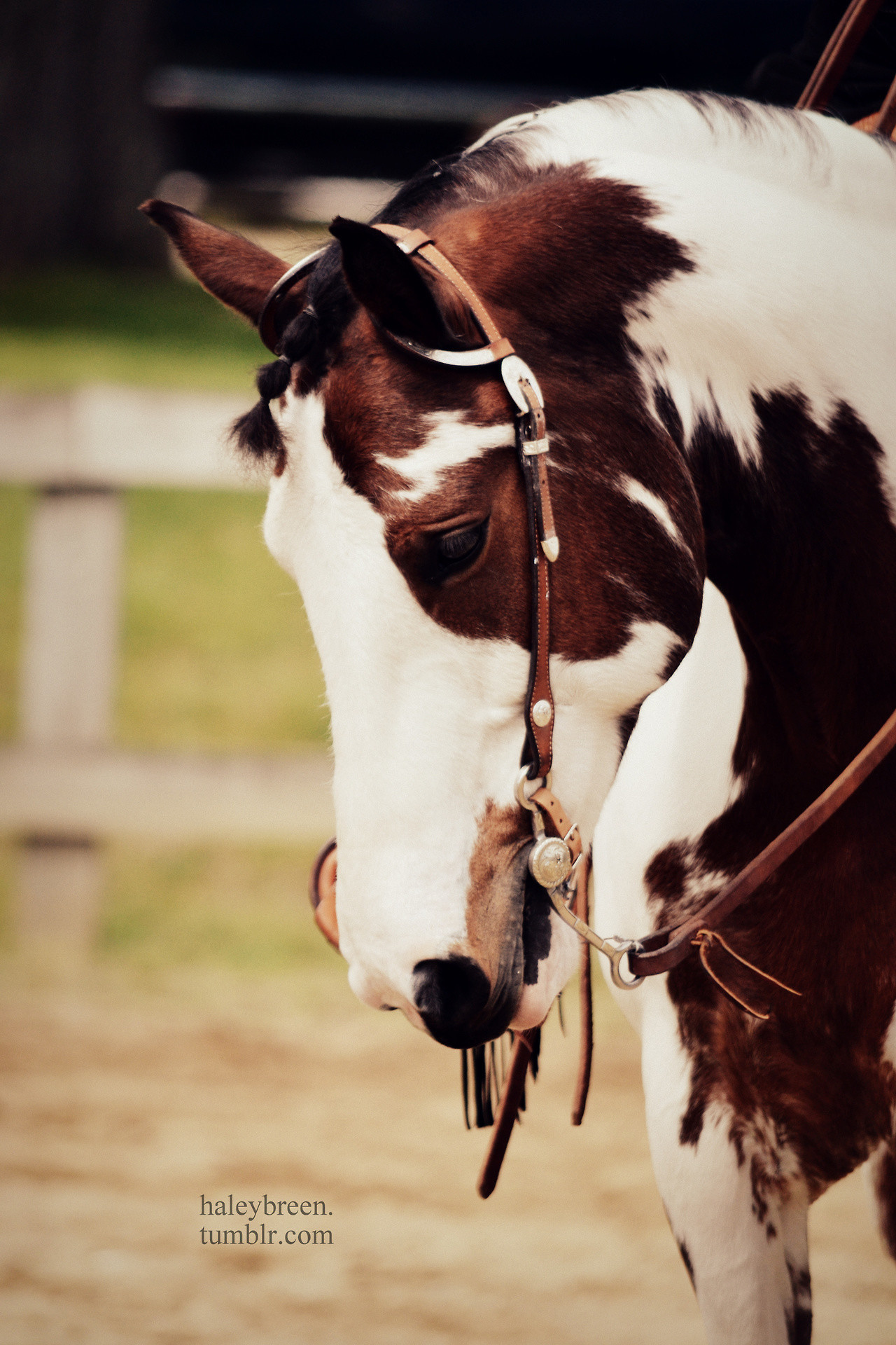 Res: 1280x1920, Chestnut Horse Wallpaper ...