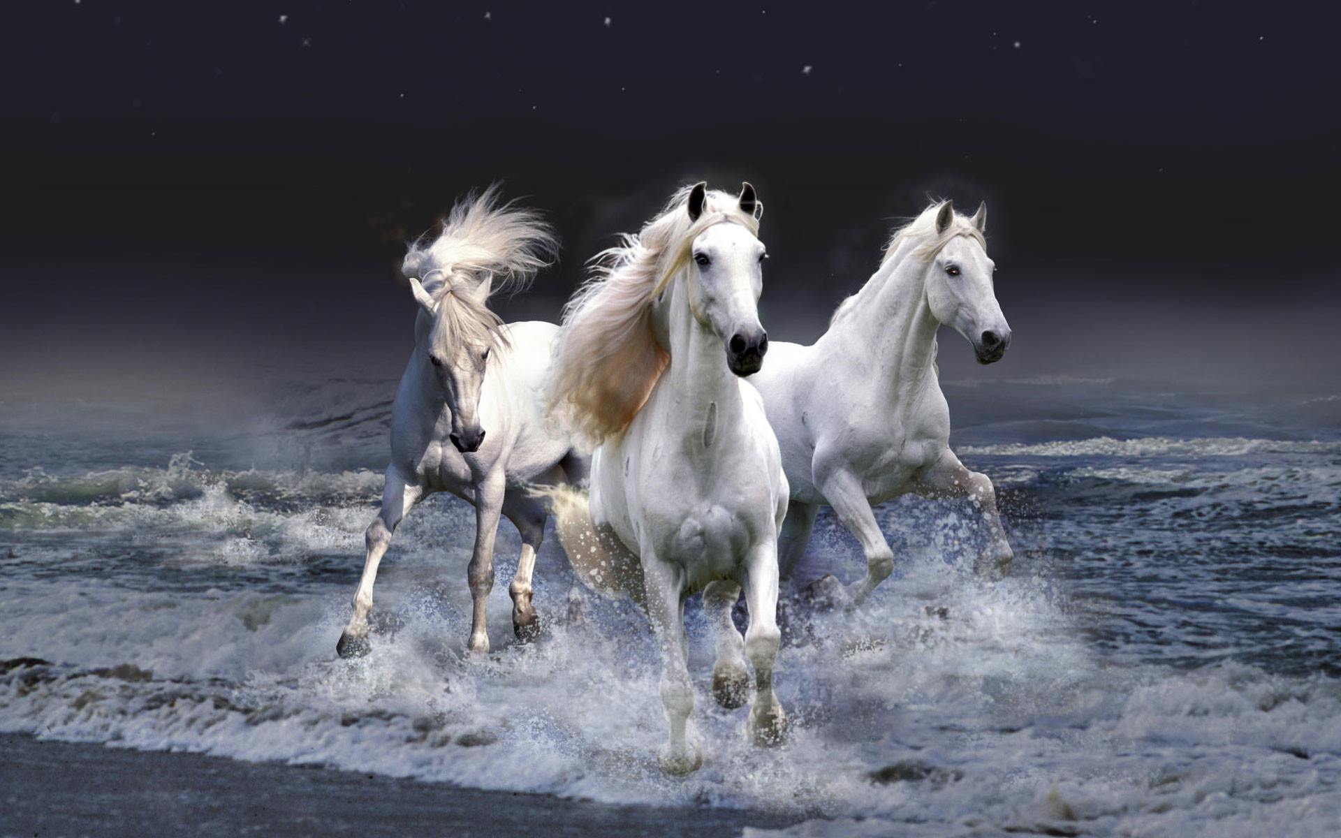 Res: 1920x1200, beautiful horse wallpapers Latest Horse Pics ...