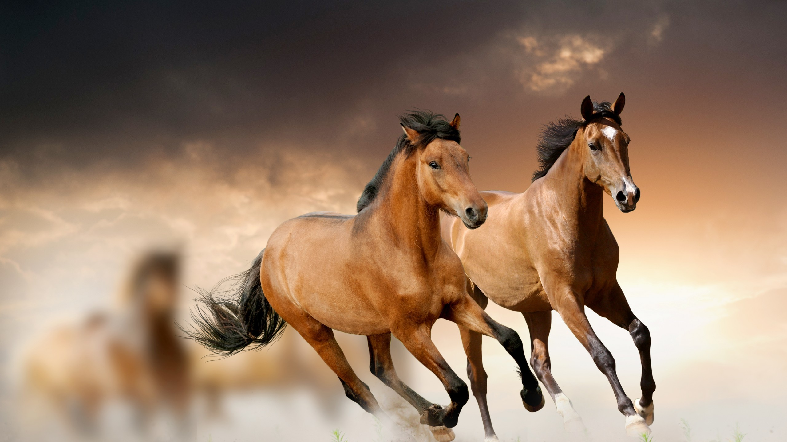 Res: 2560x1440, Running Horse Wallpaper Wallpaper