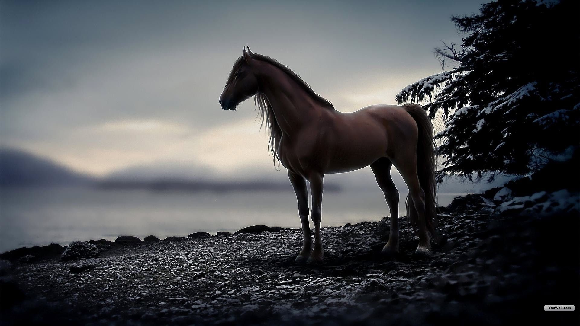 Res: 1920x1080, Free Horse Desktop Backgrounds | wallpaper horse brown wallpapers