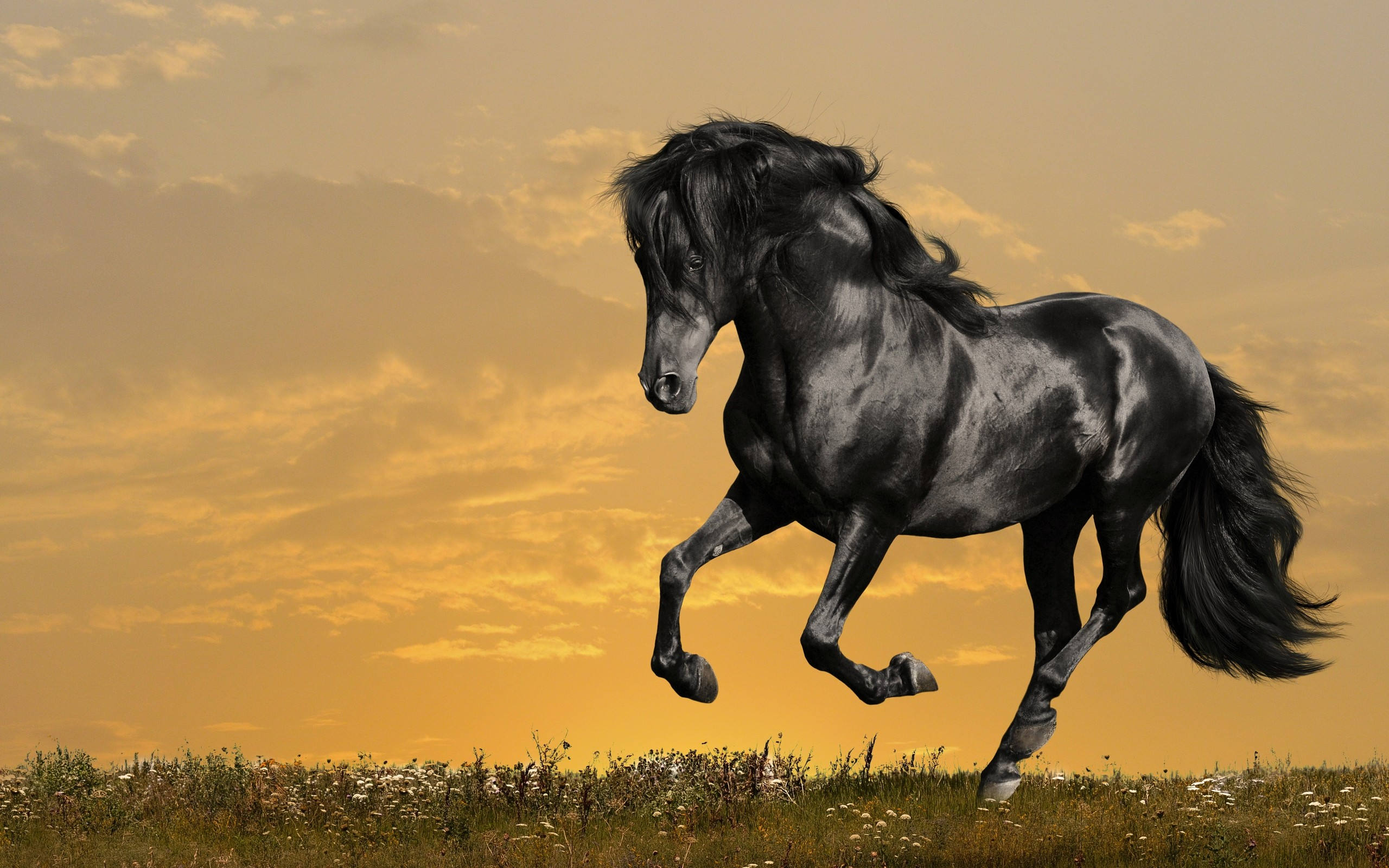 Res: 2560x1600, Horse Wallpapers