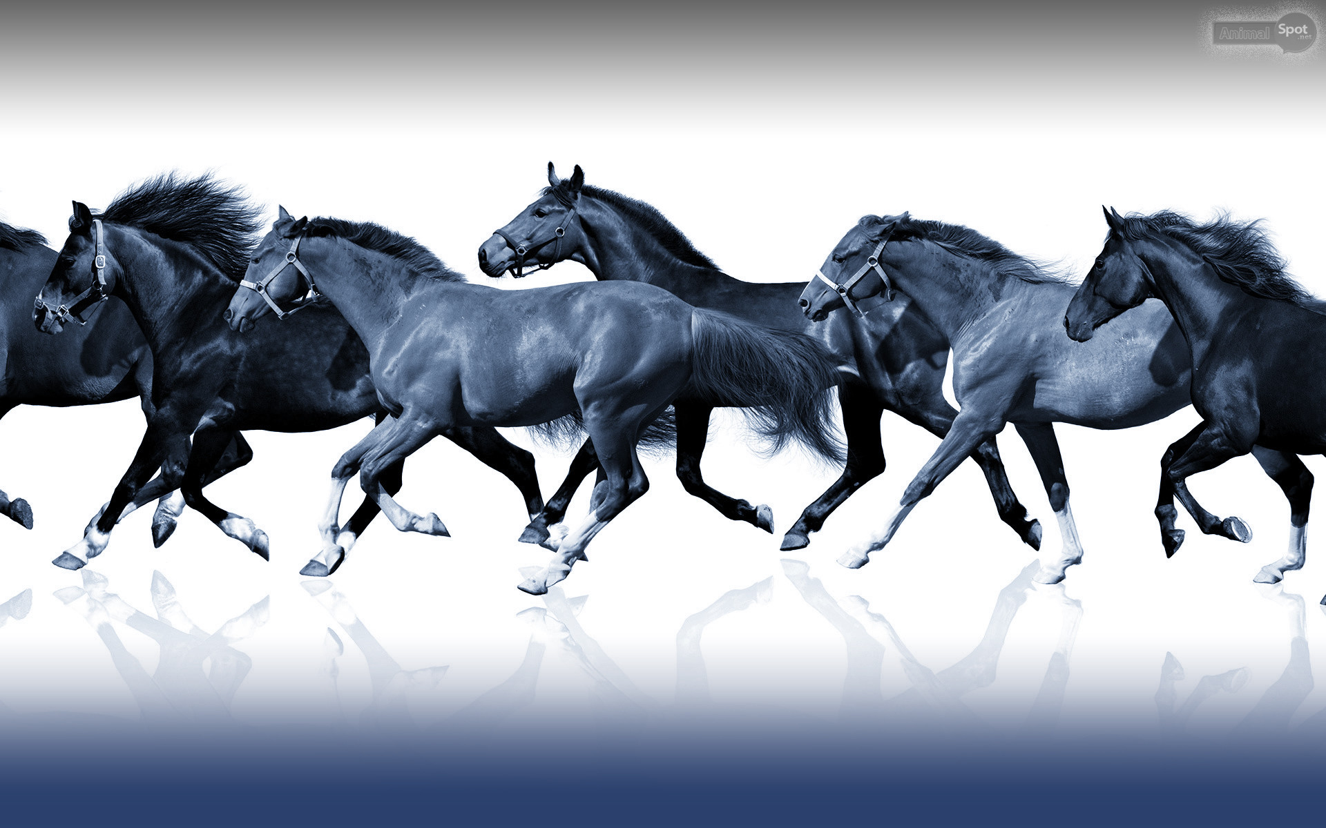Res: 1920x1200, JQK.947 Horses Wallpaper 857.34 Kb