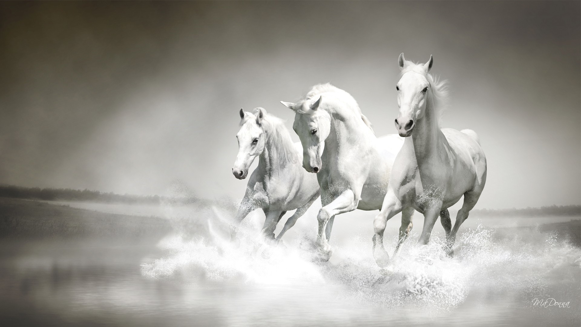 Res: 1920x1080, White Horse | Full HD Images