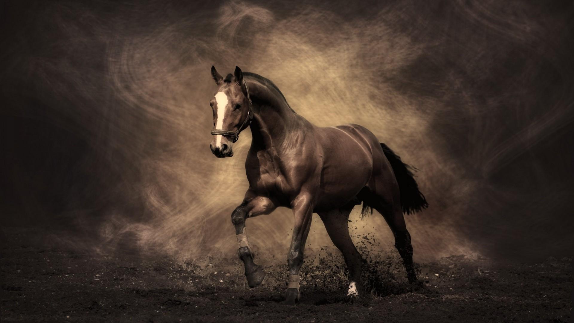 Res: 1920x1080, Horse
