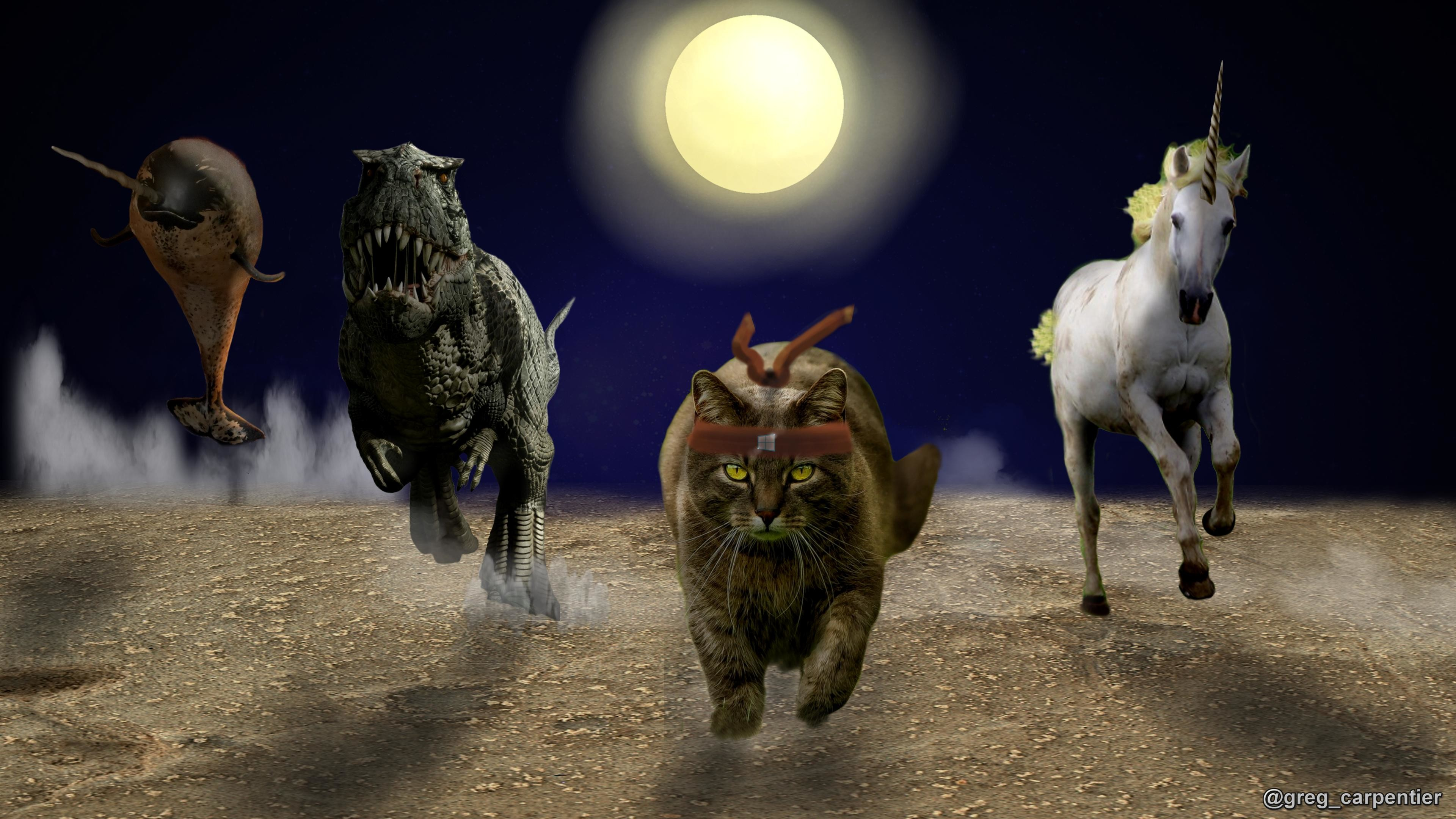 Res: 3840x2160, ... Ninja Cat Wallpaper By Greg Carpentier ...