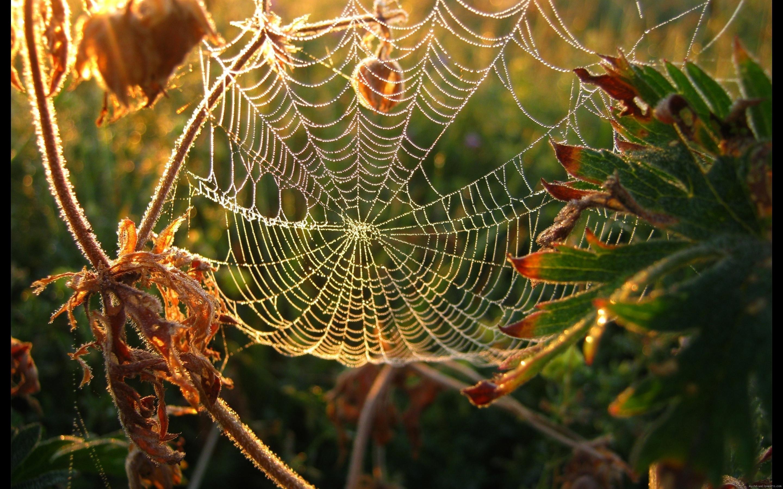 Res: 2880x1800, wie: 4 - Abneigung: 0 - gesamt: (4 Stimmen) Hinweis: 5.00 / 5. Eingestellt  von: MY HD Wallpapers Tags: Spinne, Netz, Herbst, Tau, Tier