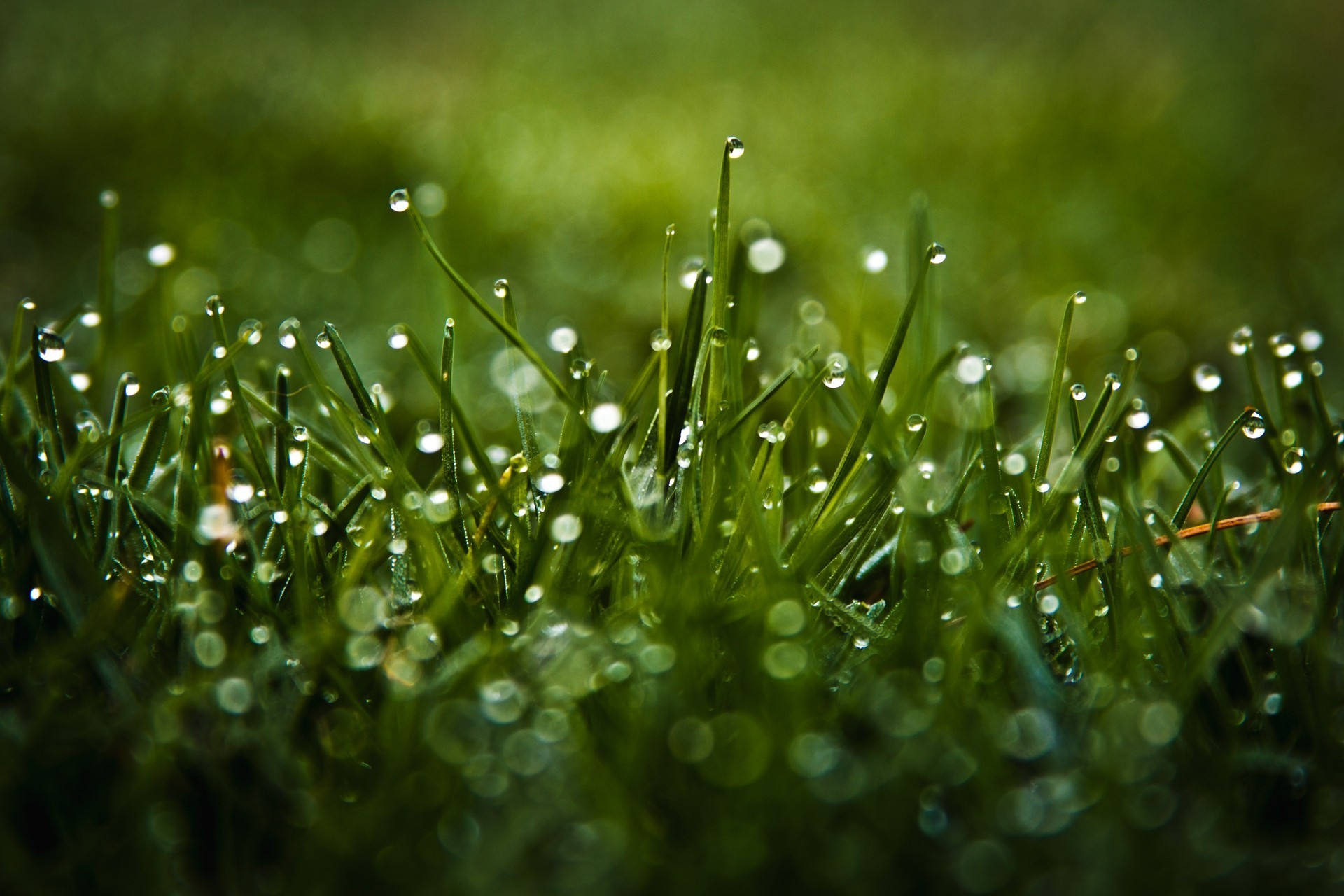 Res: 1920x1280, Green nature grass water drops macro dew wallpaper