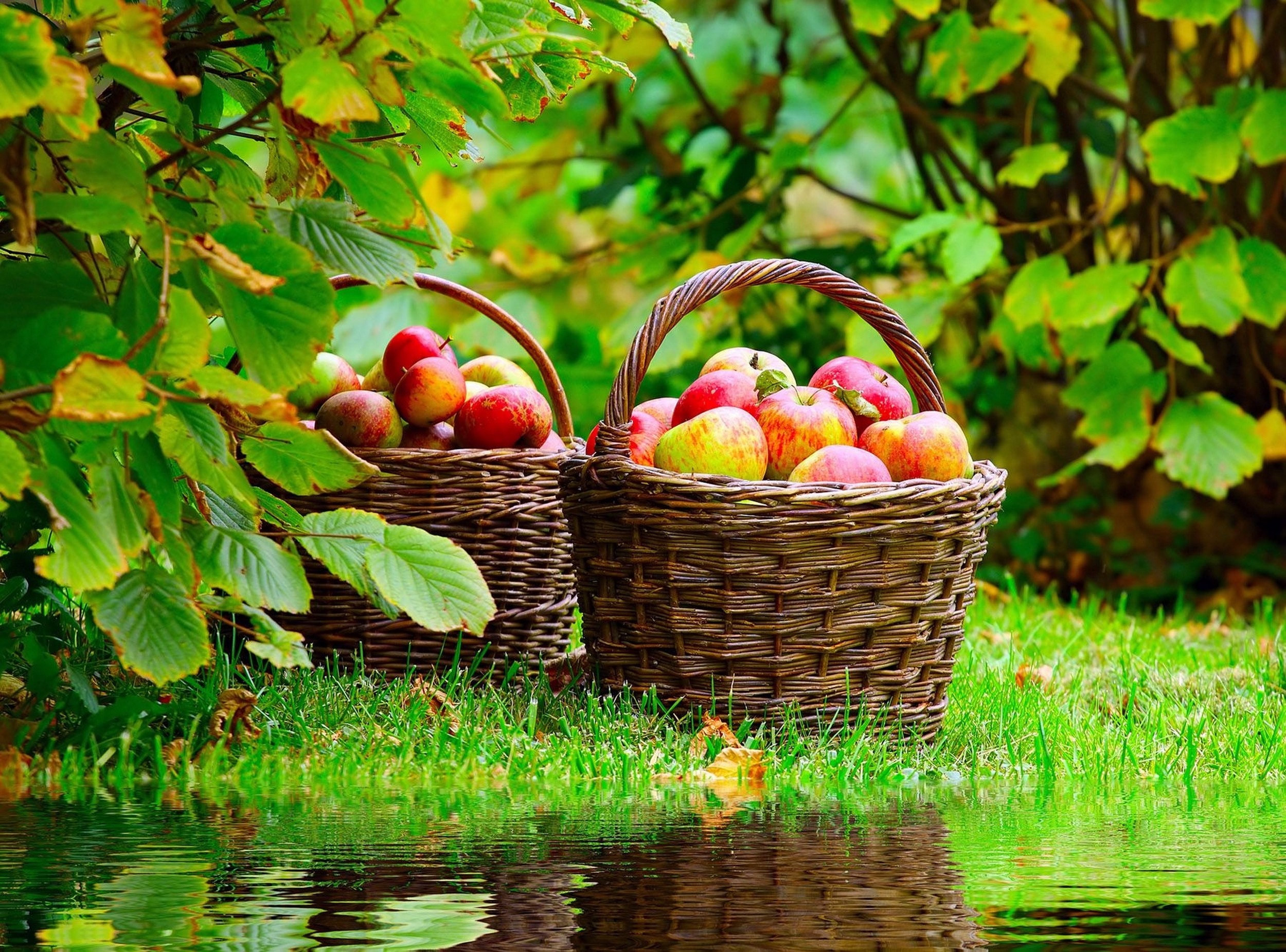 Res: 2500x1851, Ripe Apples In Basket | 2500 x 1851 | Download | Close