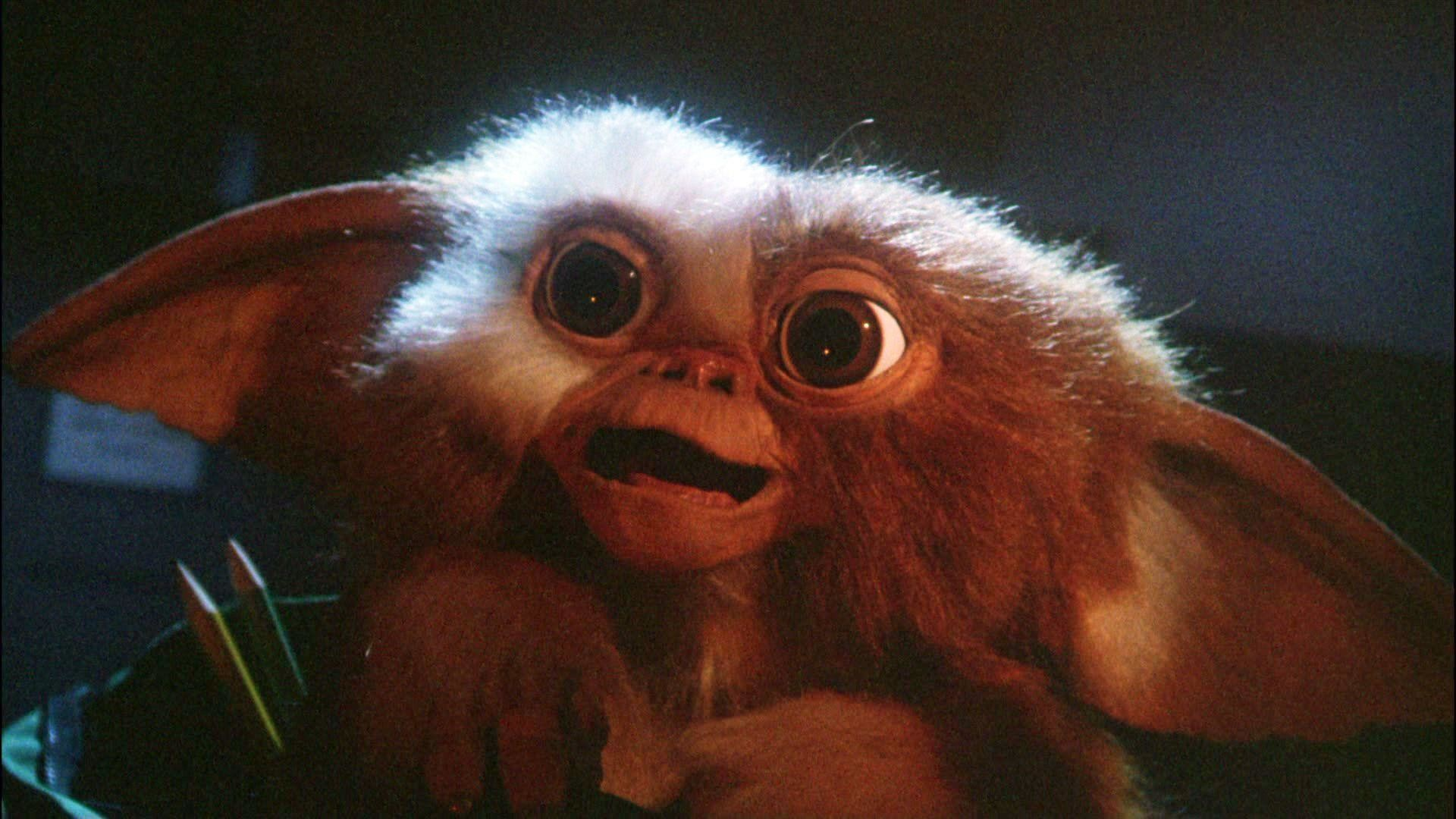 Res: 1920x1080, Gremlins Gizmo Wallpaper - Viewing Gallery