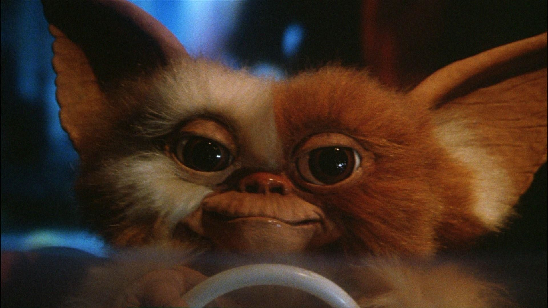 Res: 1920x1080, Gremlins Gizmo | Reviews & Ratings | Cheats & Discussion | Epicbuzz