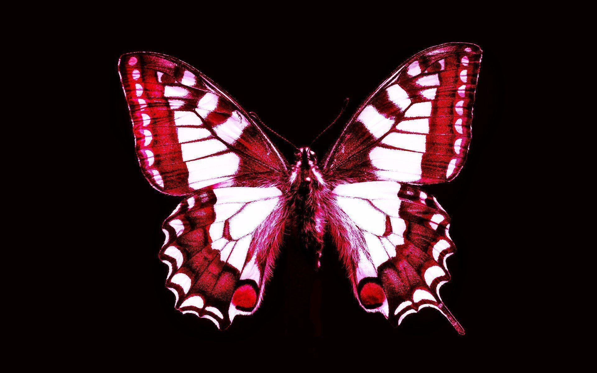 Res: 1920x1200, Red Butterfly Wallpapers   True HD Pictures