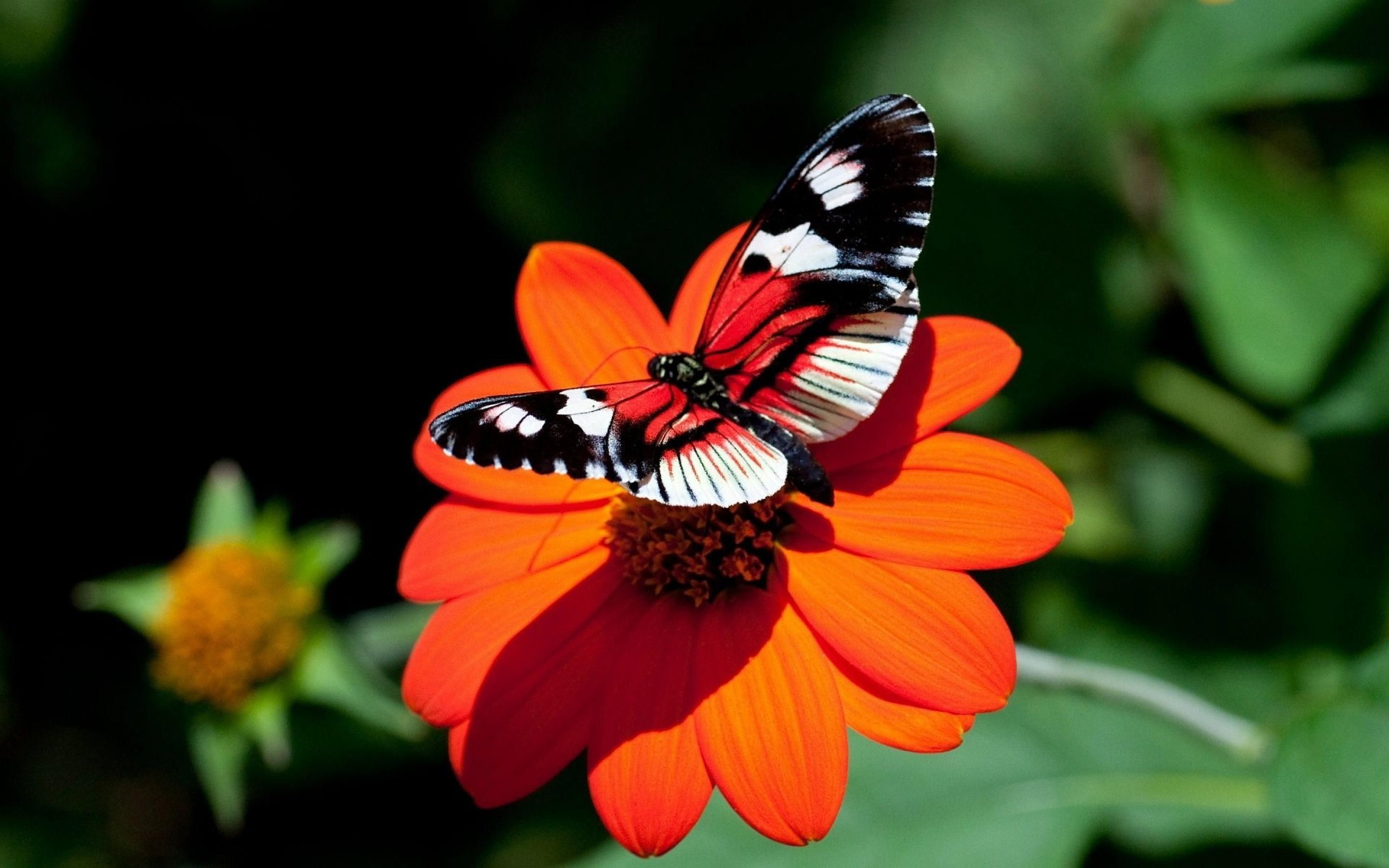 Res: 2880x1800, Red Flower With A Butterfly WallPaper HD - http://imashon.com/w/nature/red -flower-butterfly-wallpaper-hd.html