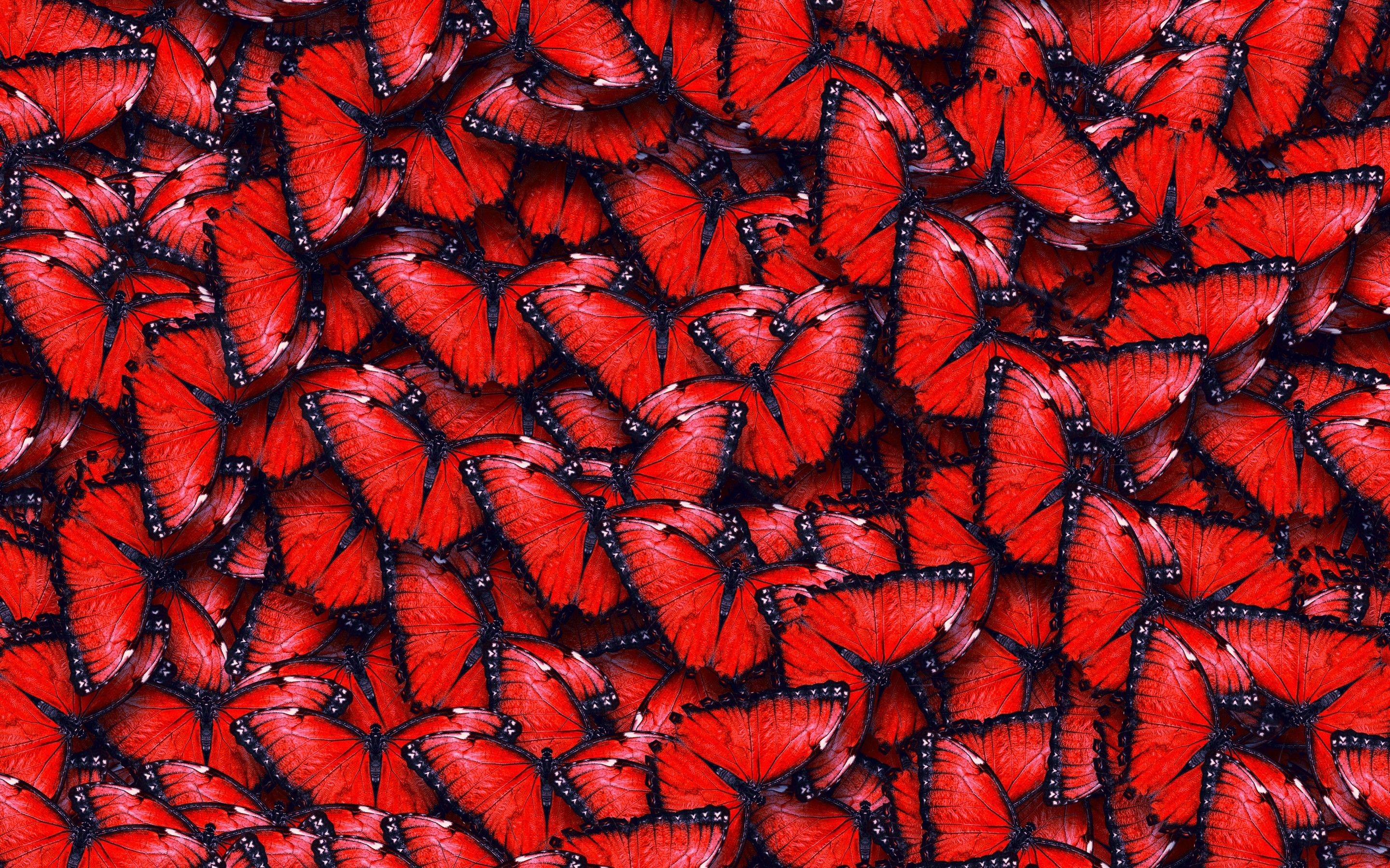 Res: 2880x1800, texture red butterfly wallpaper by sophiaLane   RevelWallpapers.net