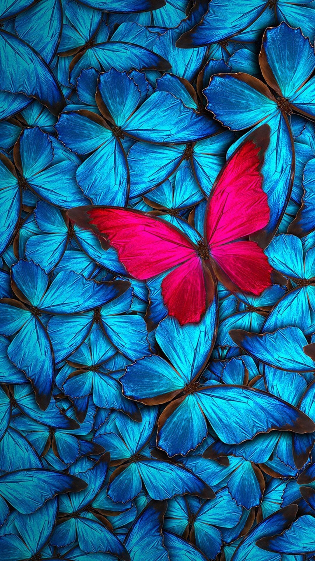 Res: 1080x1920, Blue with Red Butterfly Wallpaper
