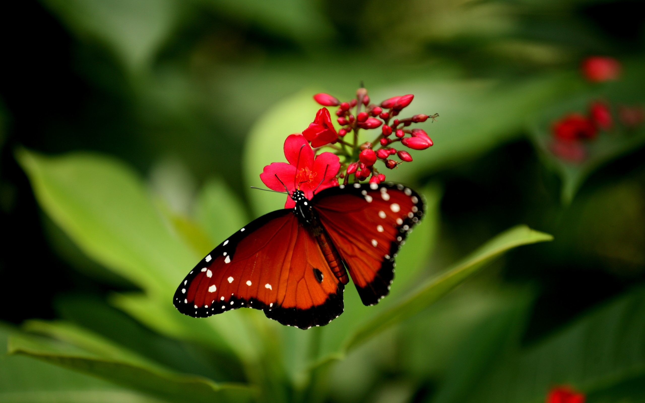Res: 2560x1600, Beautiful Butterfly   wallpapers55.com - Best Wallpapers for PCs .