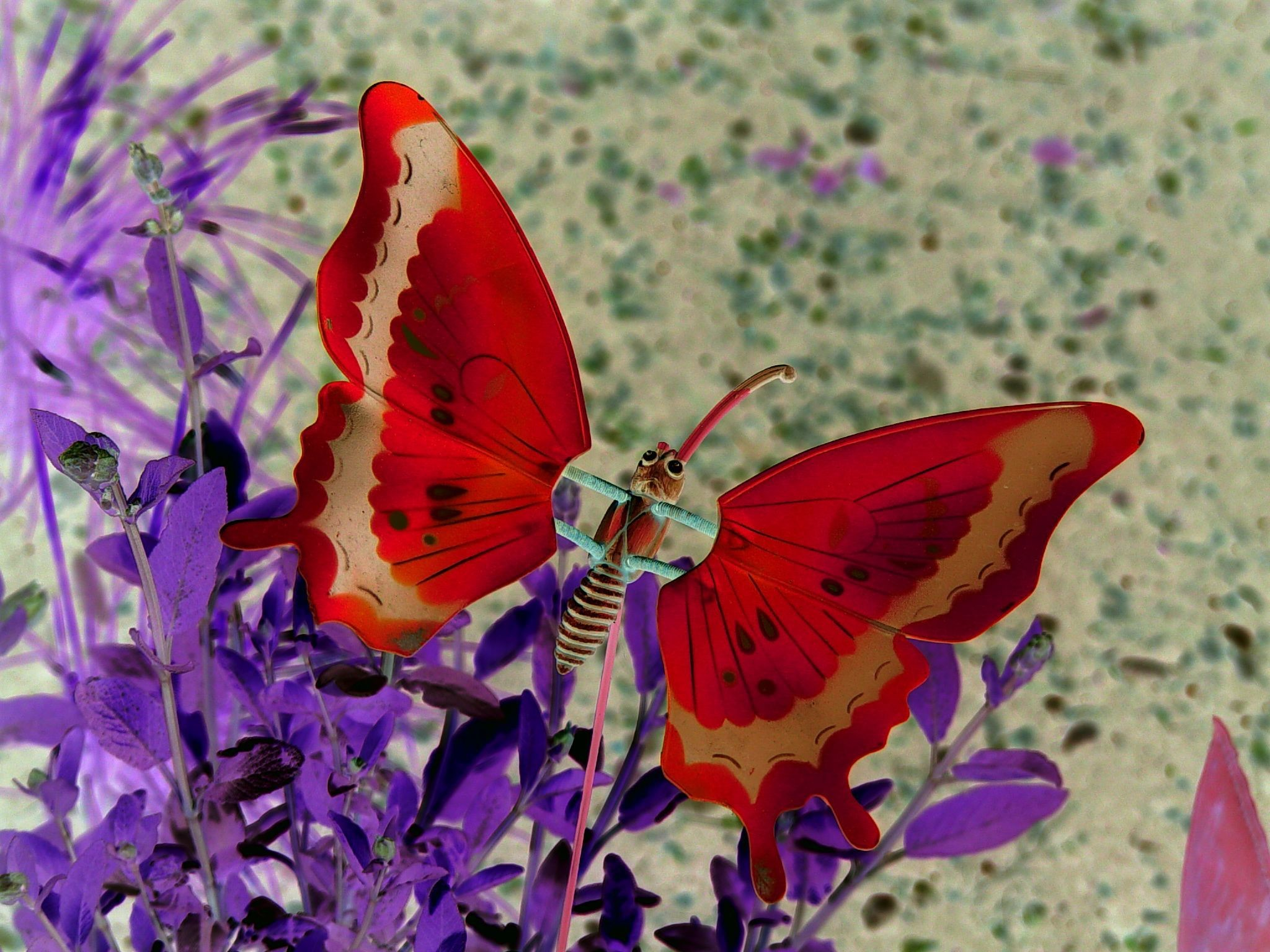 Res: 2048x1536, rare butterfly photos   rare red butterfly – wallpaper – 2048 x 1536  Wallpaper