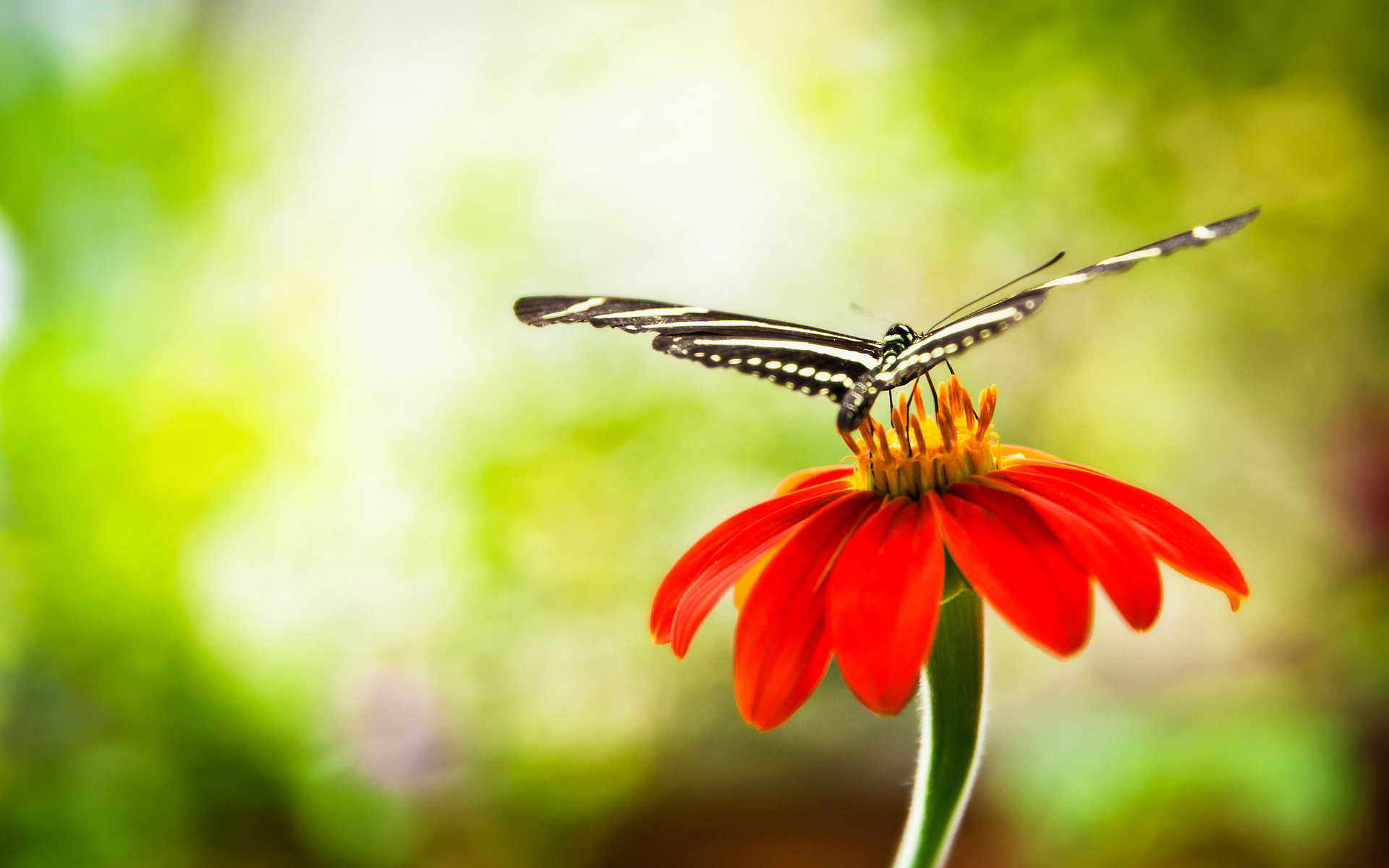 Res: 1920x1200, Flowers With Butterfly Wallpapers Hd.