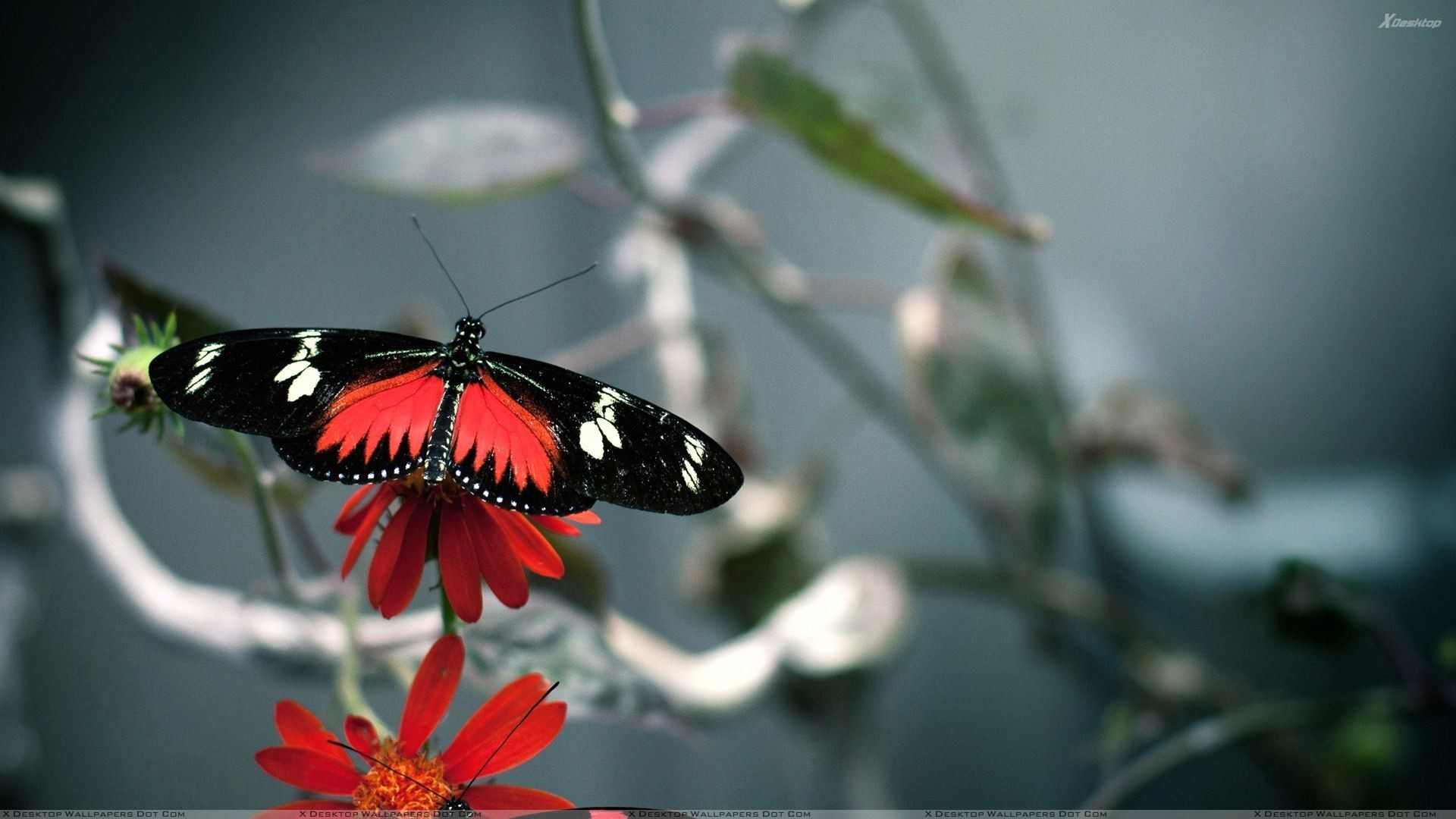 """Res: 1920x1080, You are viewing wallpaper titled """"Red And Black Butterfly ..."""