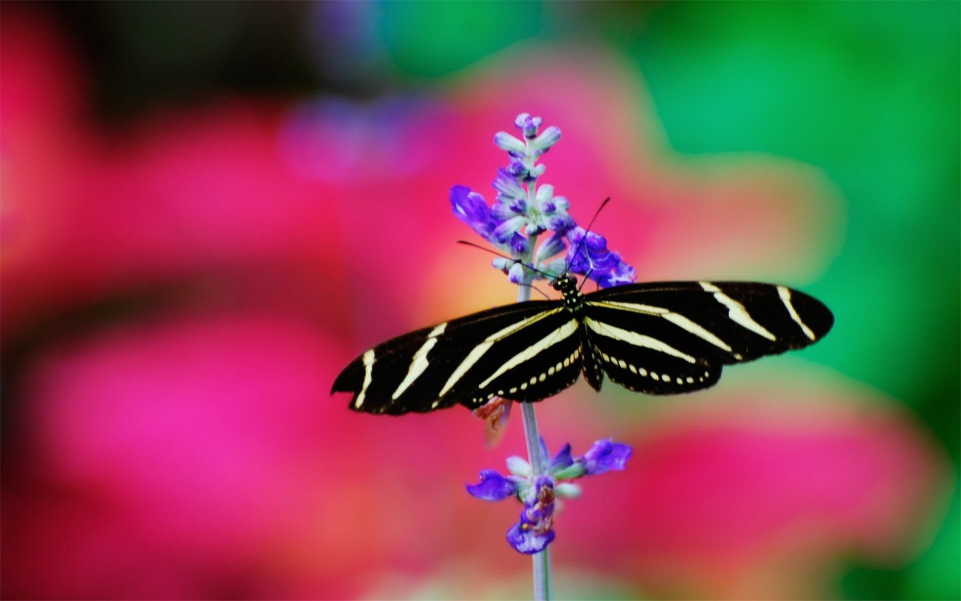 Res: 1920x1200, wallpaper BLACK BUTTERFLY   Black and white butterfly wallpapers and images  - wallpapers, pictures .