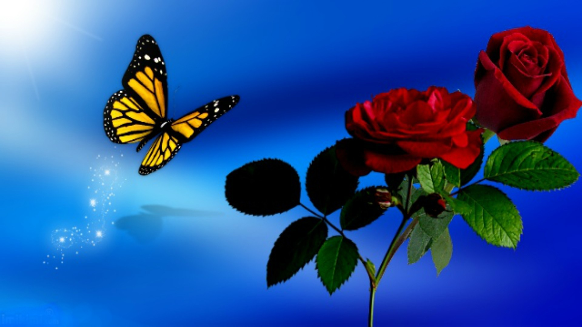 Res: 1920x1080, Butterfly Sky Spring Blue Roses Red Flowers Wallpapers Hd For Facebook