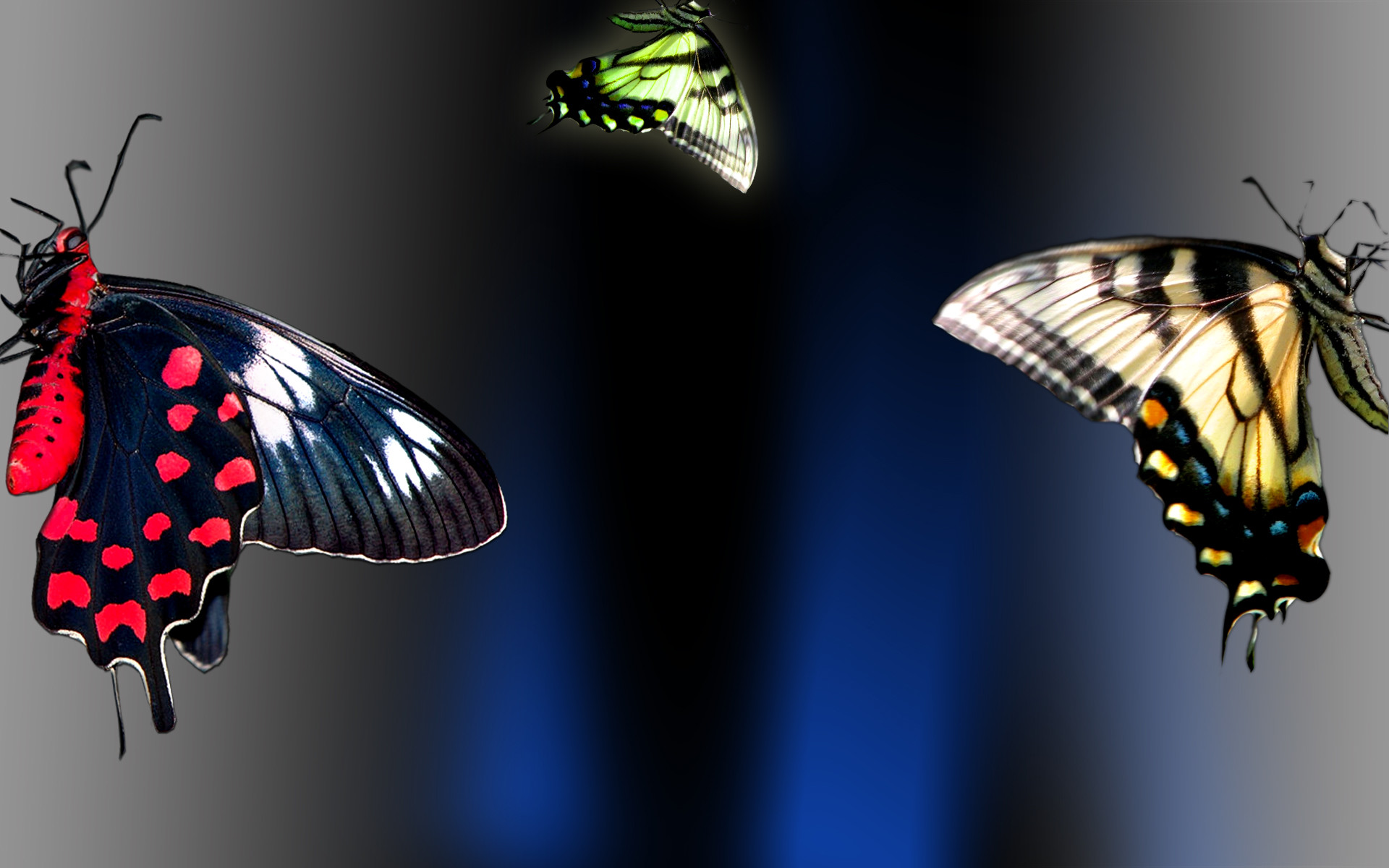Res: 1920x1200, Best Butterfly Wallpapers and Backgrounds