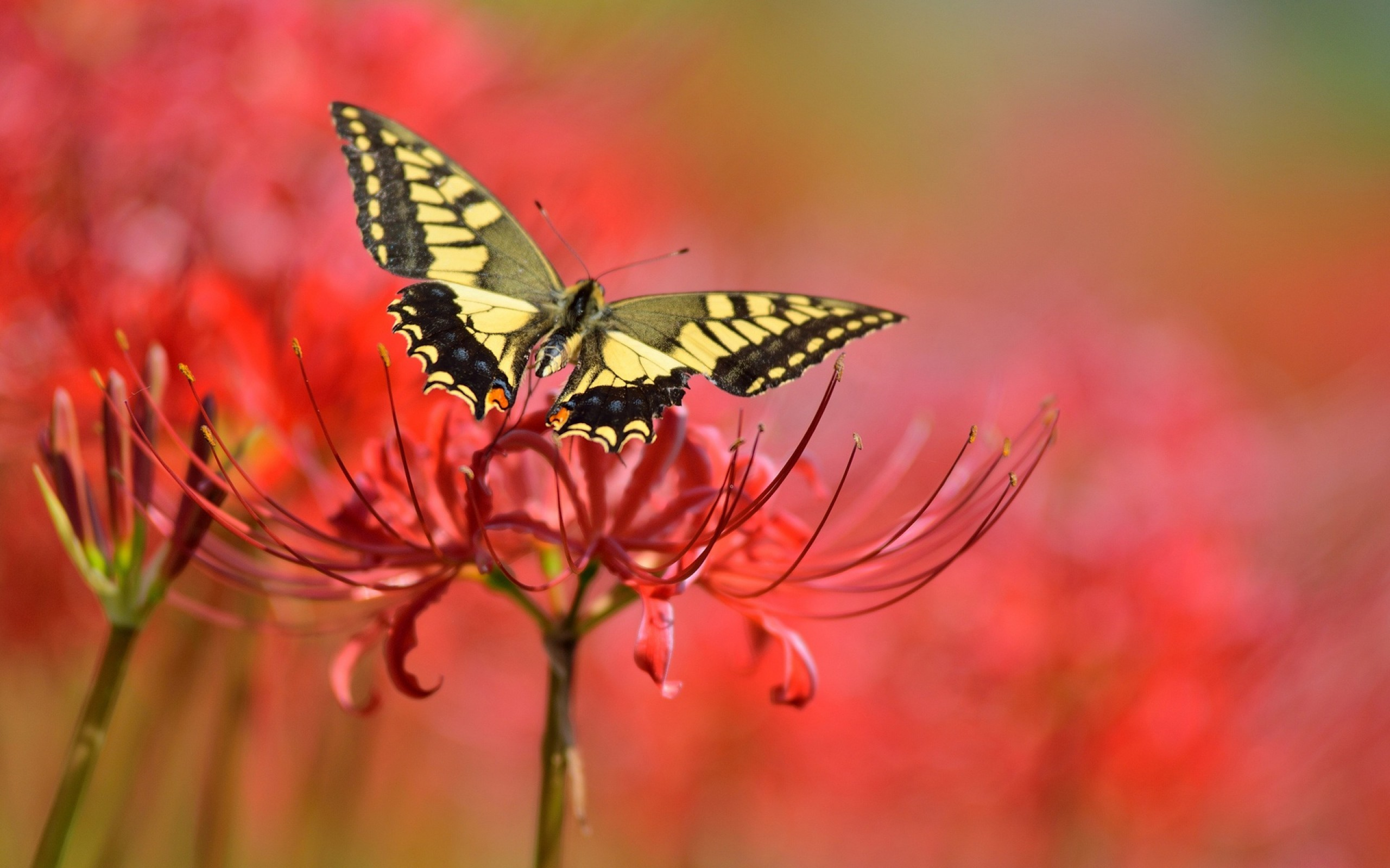 Res: 2560x1600, 75 Beautiful Butterfly Pictures Cool Digital Photography