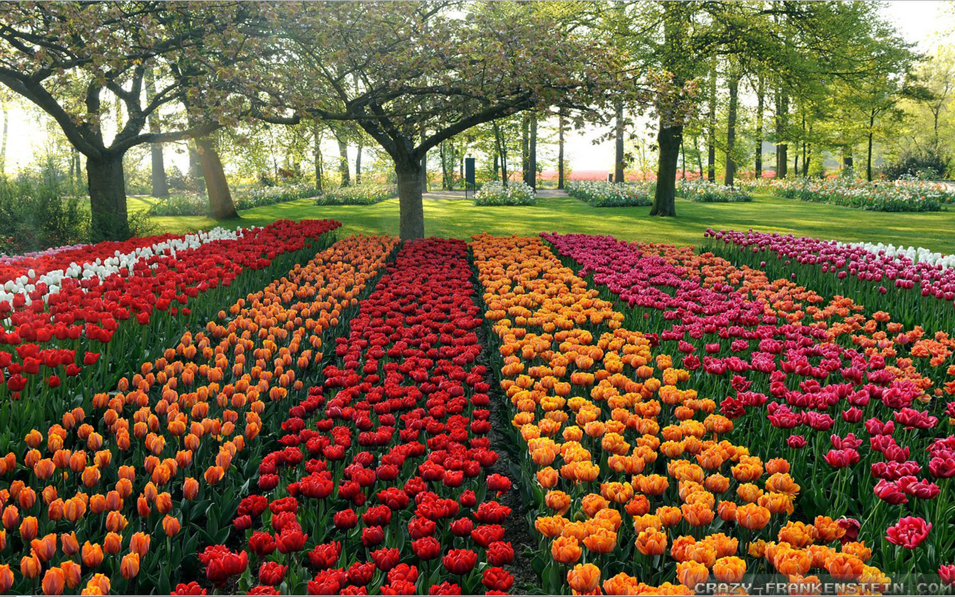 Res: 1920x1200, rows-beautiful-flower-garden-wallpapers-free-hd-for-