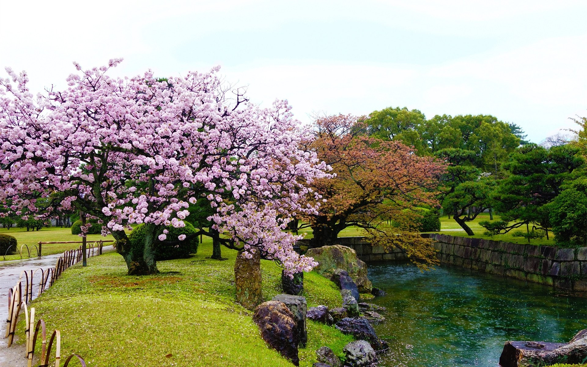 Res: 1920x1200, Beautiful Nature Beauty Water Tree Flower Garden Wallpapers Collection  Download -