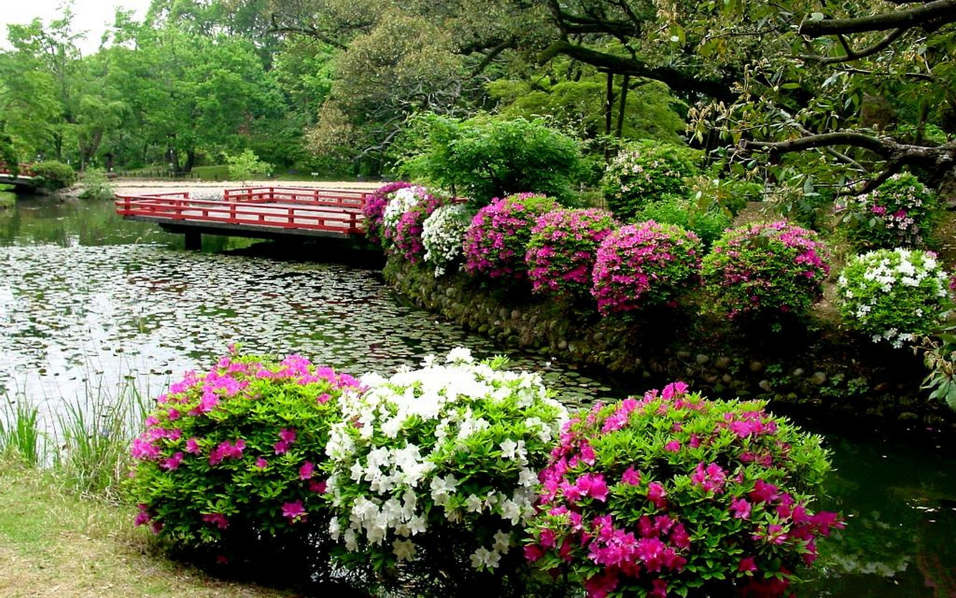 Res: 1920x1200, Lush Greenery Pictures Beautiful Gardens