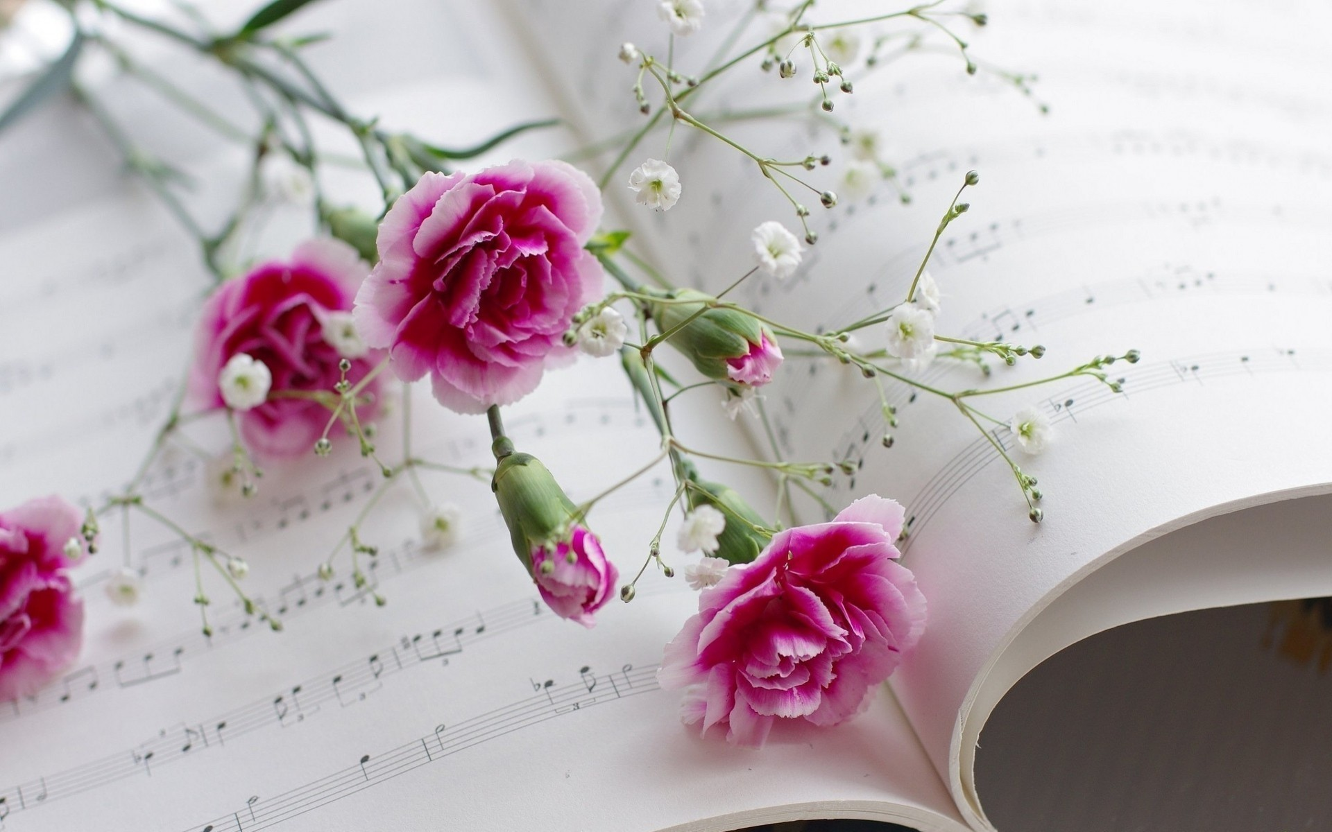 Res: 1920x1200, Pink flowers and music wallpaper