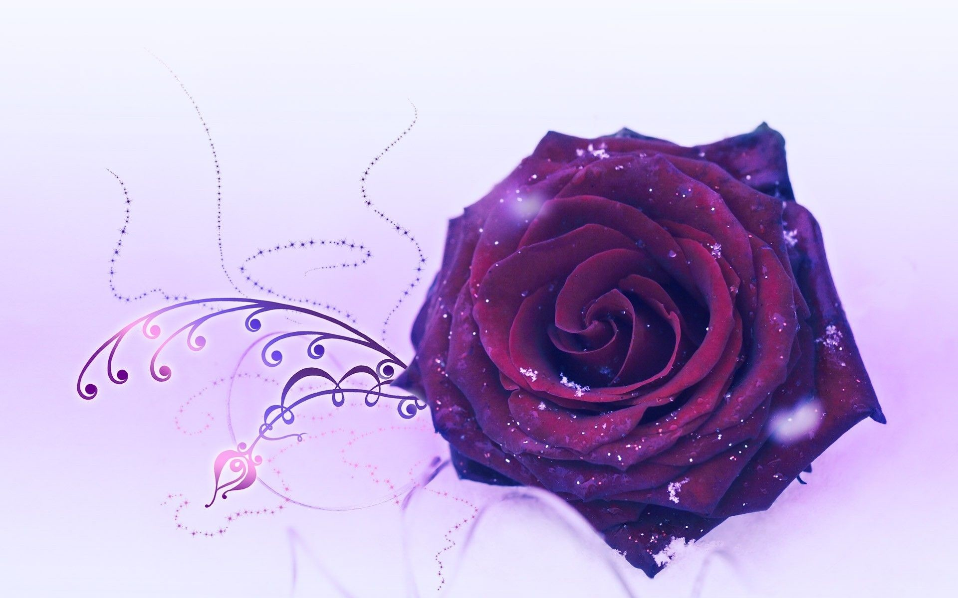 Res: 1920x1200, Purple-Red HD Wallpaper | Purple Rose Wallpapers