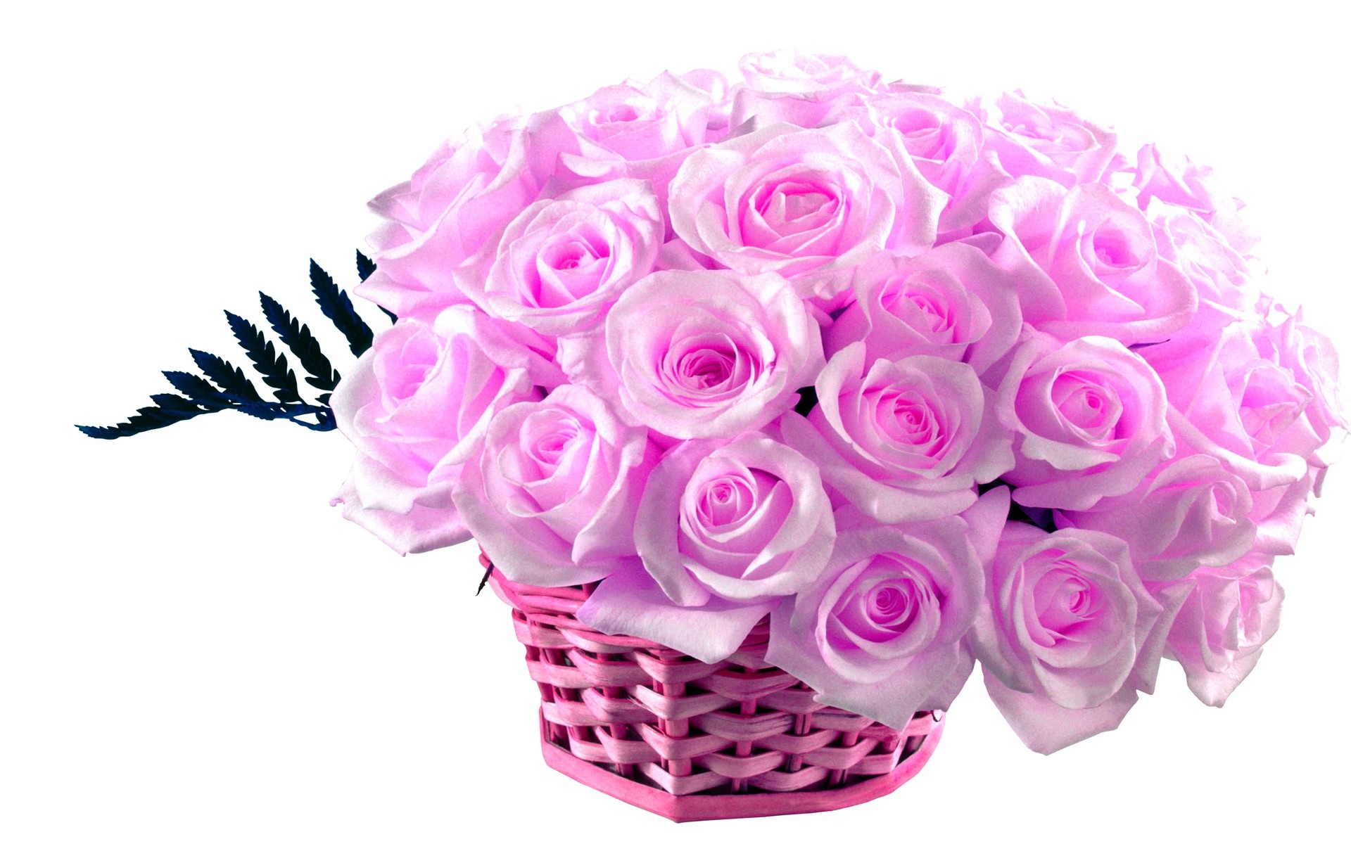 Res: 1920x1200, pink rose bouquet