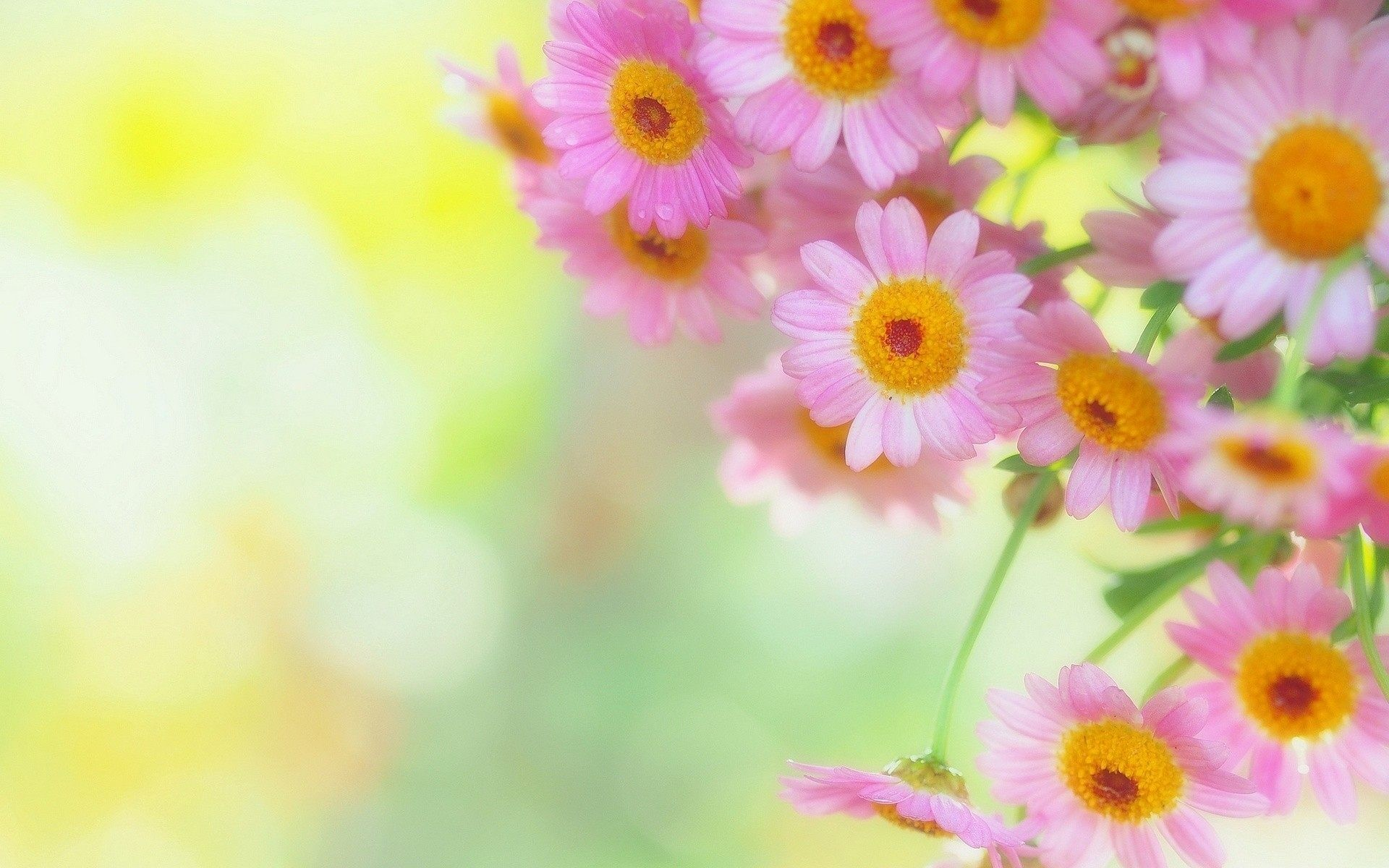 Res: 1920x1200, Free Flower Background Wallpaper High Quality Widescreen Fresh Flowers For  Desktop And Mobile Of Computer