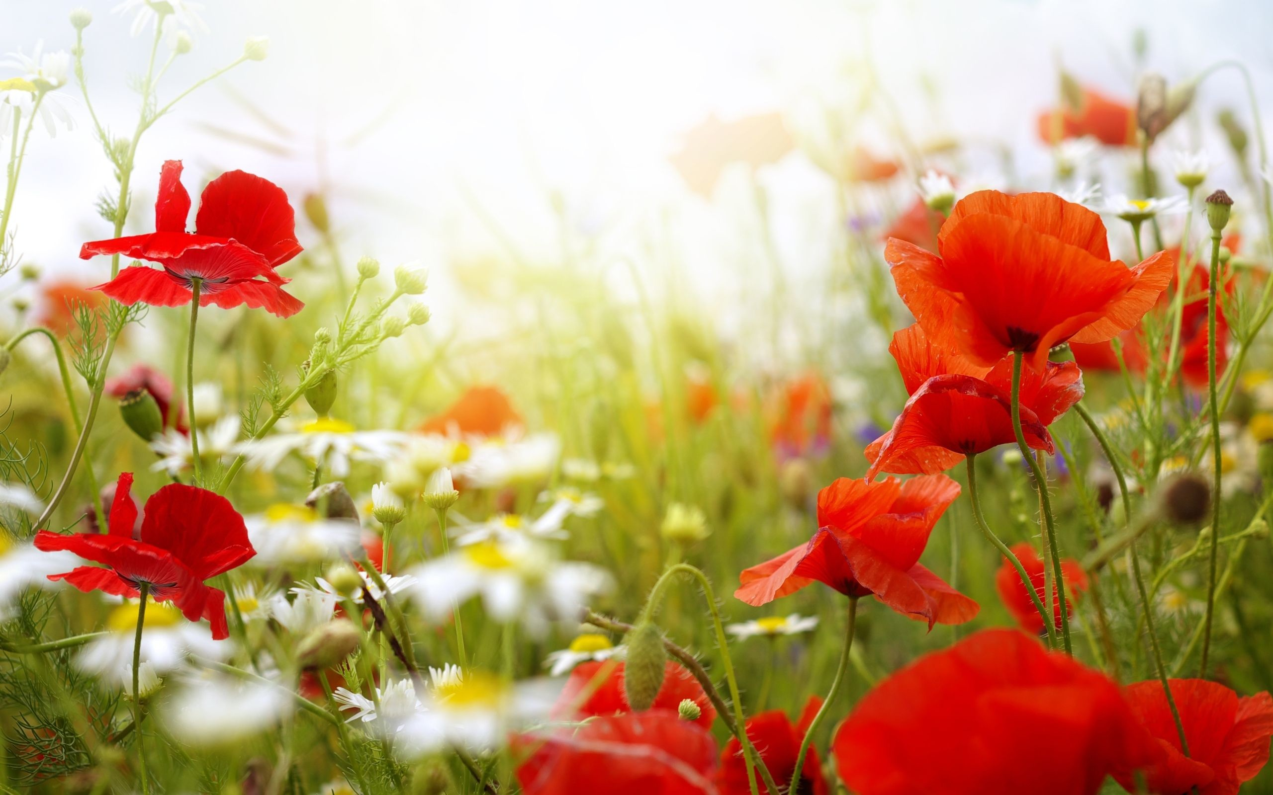 Res: 2560x1600, flower background | flower backgrounds hd hd wallpapers