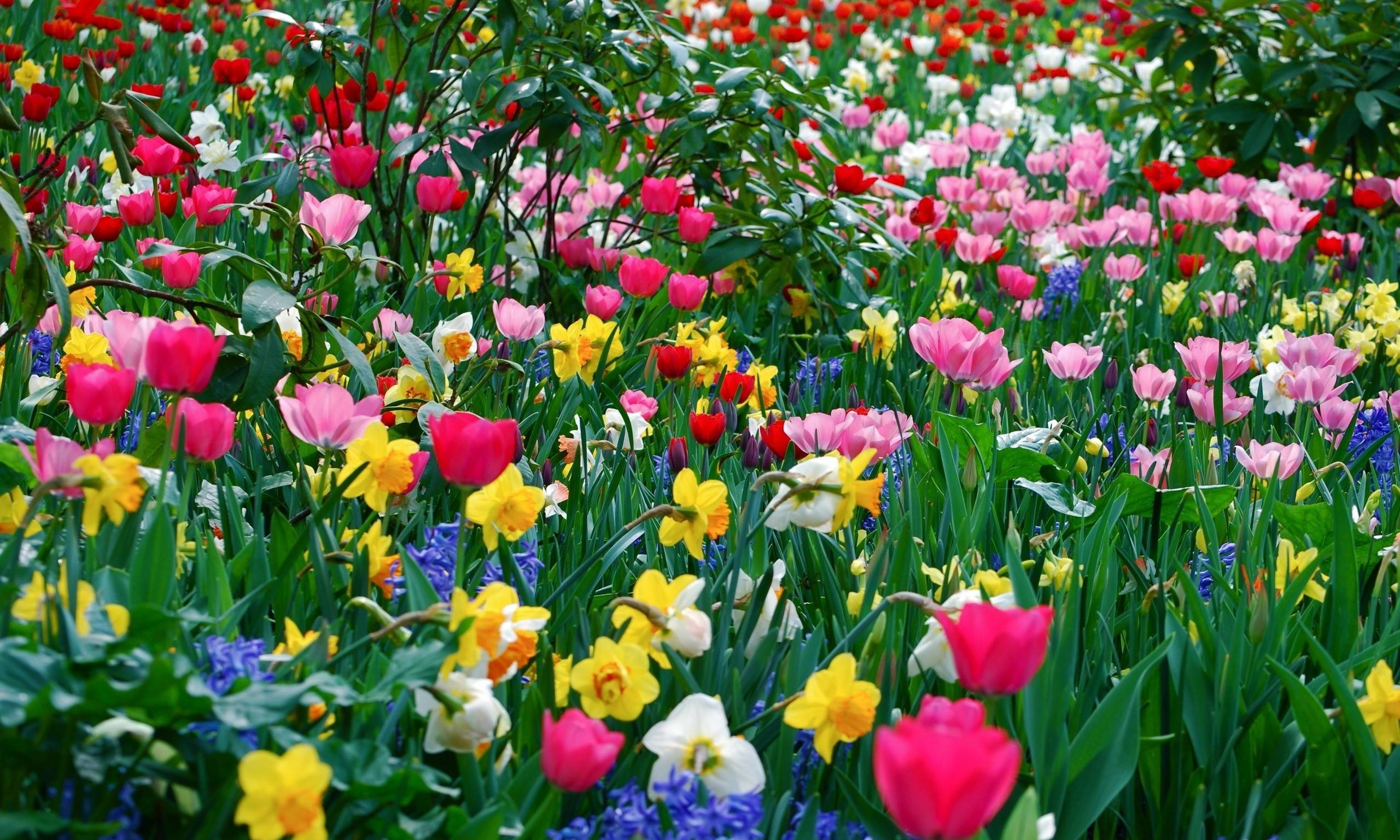 Res: 2560x1536, Spring Flowers Background Hd Pictures 4 HD Wallpapers | aduphoto.