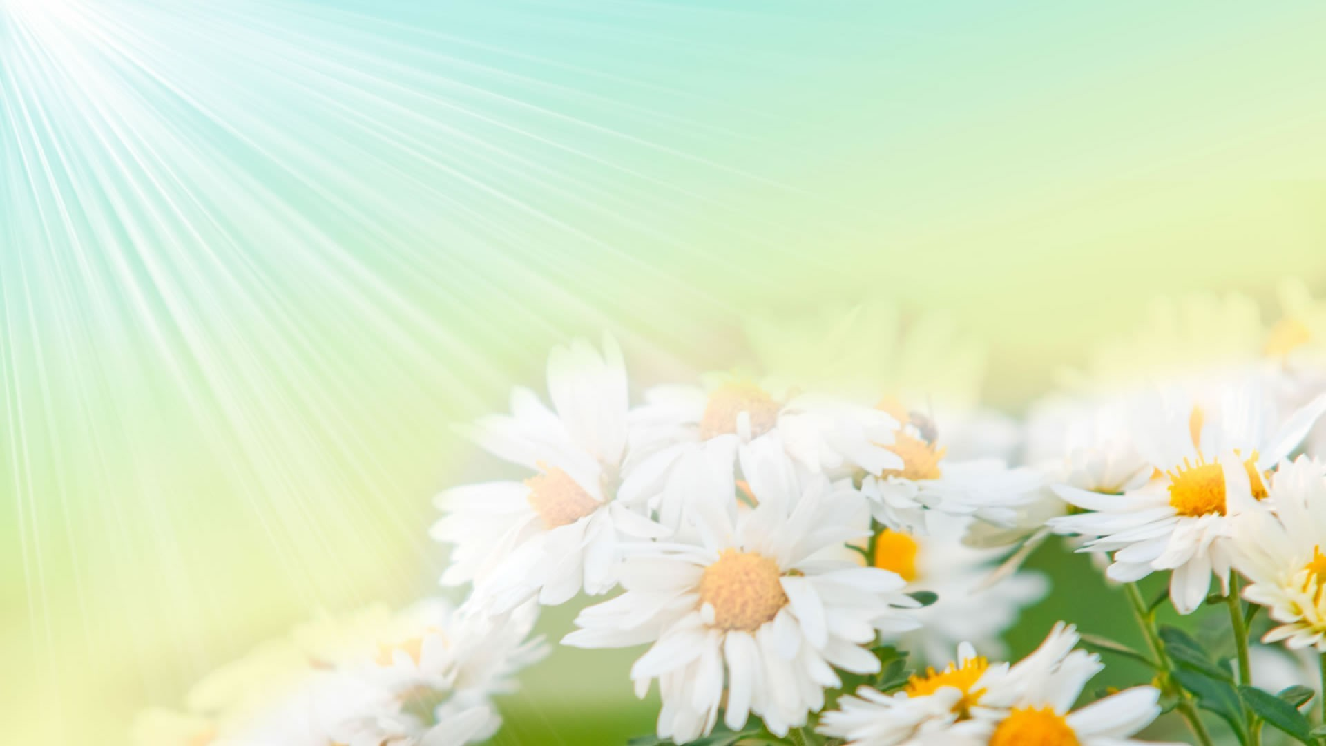 Res: 1920x1080, Best Flower Wallpapers High Resolution Archives - Only Fun