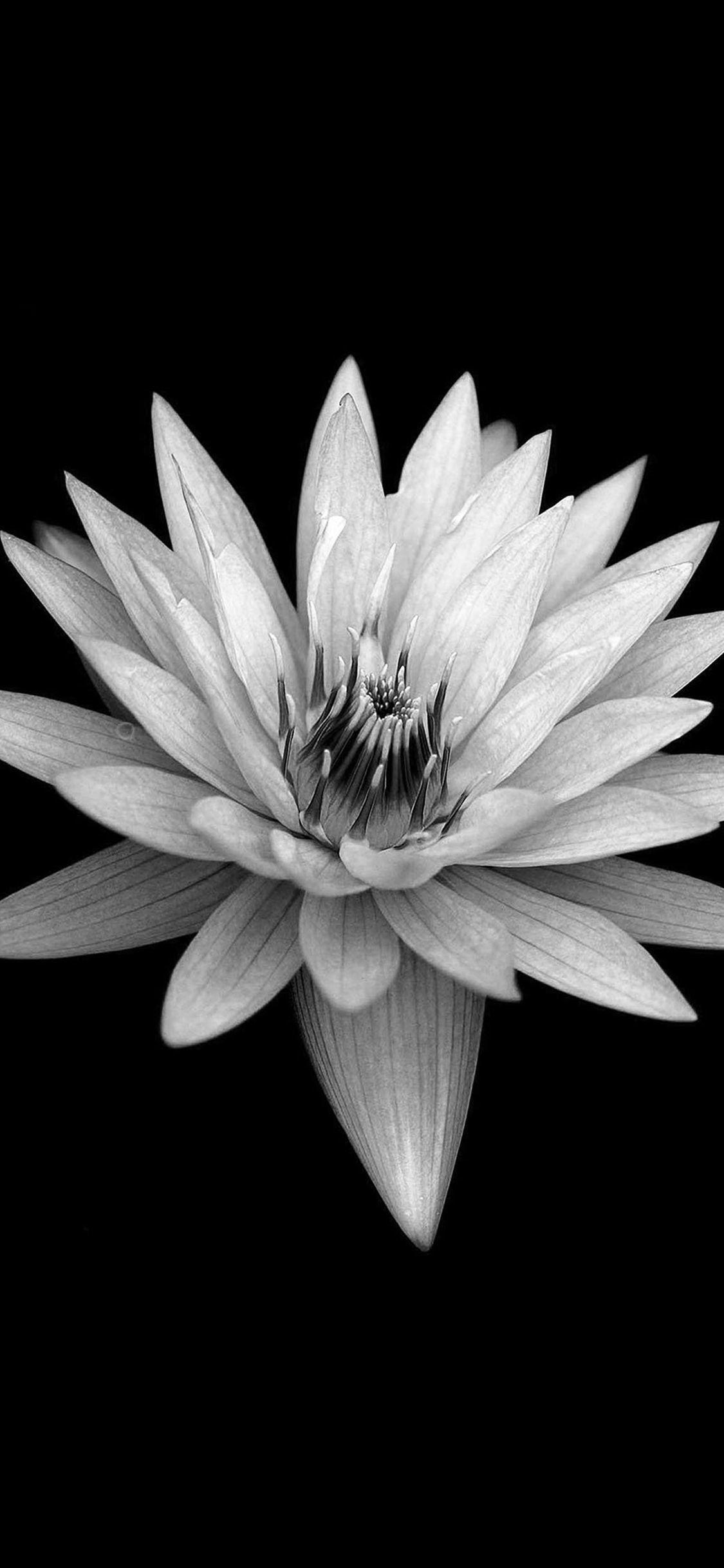 Res: 1125x2436, Dark Flower Black Background #iPhone #X #wallpaper