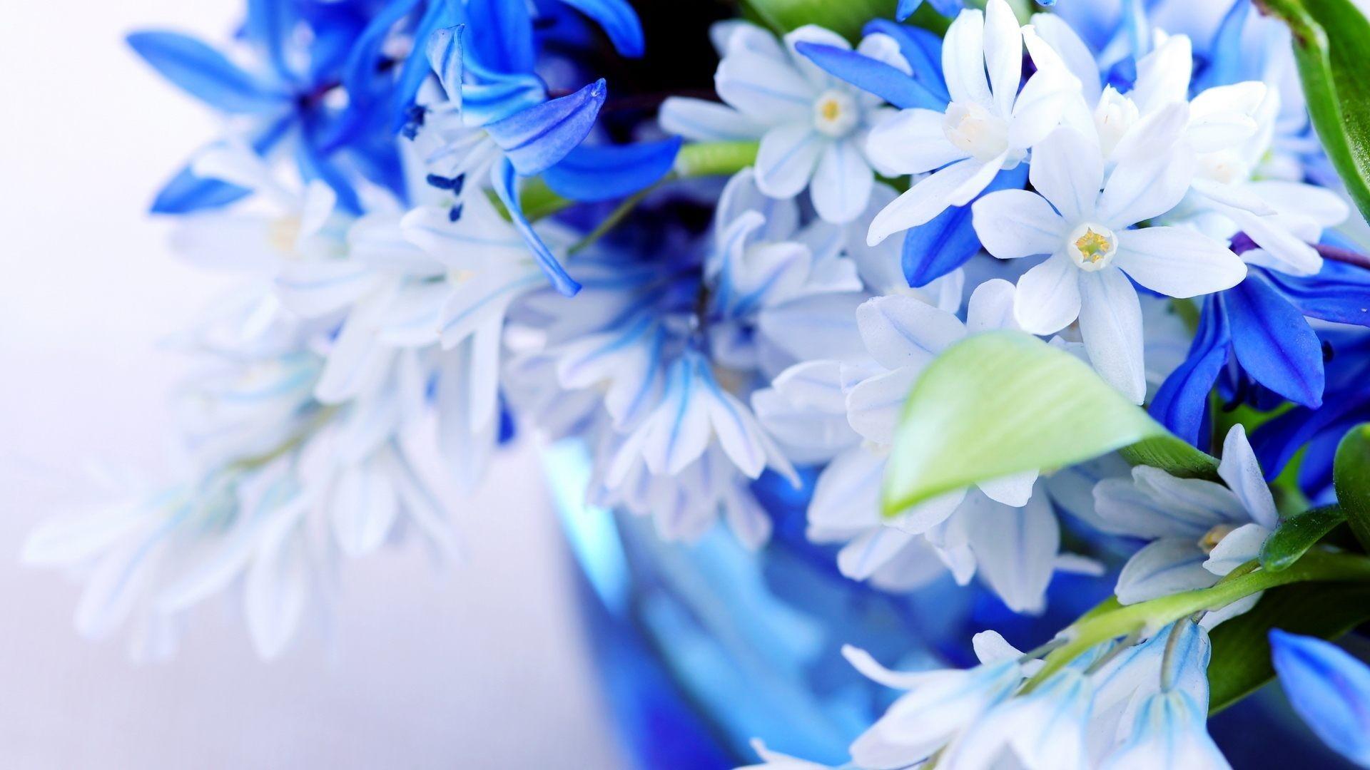 Res: 1920x1080, Blue Flower Background