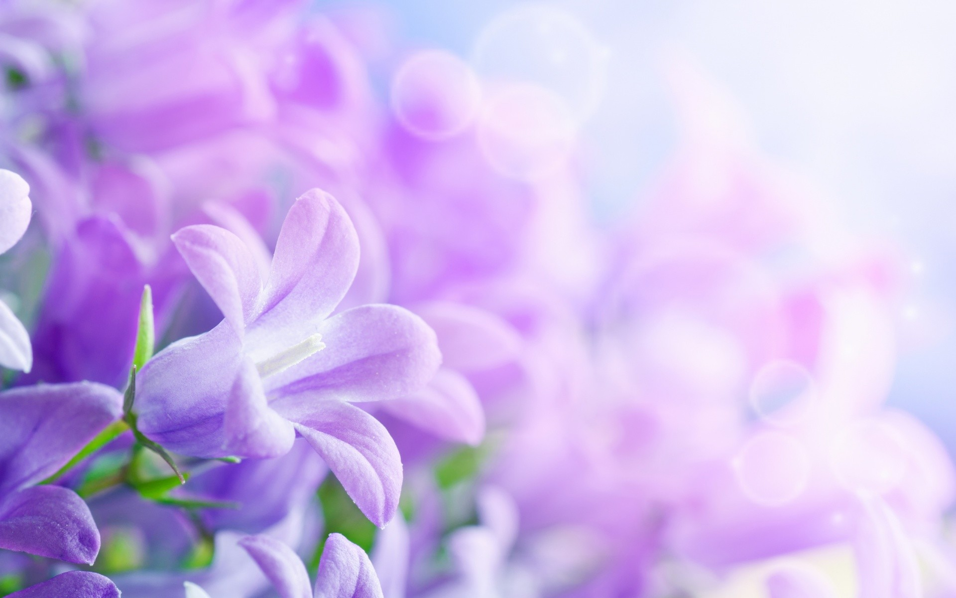 Res: 1920x1200, Download Free Wallpaper Flowers Background.