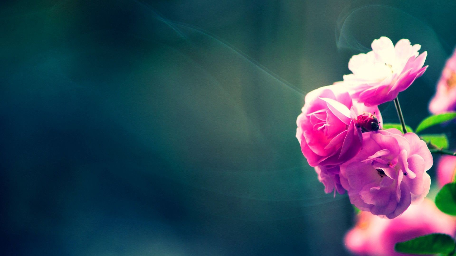 Res: 1920x1080, Flower Wallpapers | Best Wallpapers
