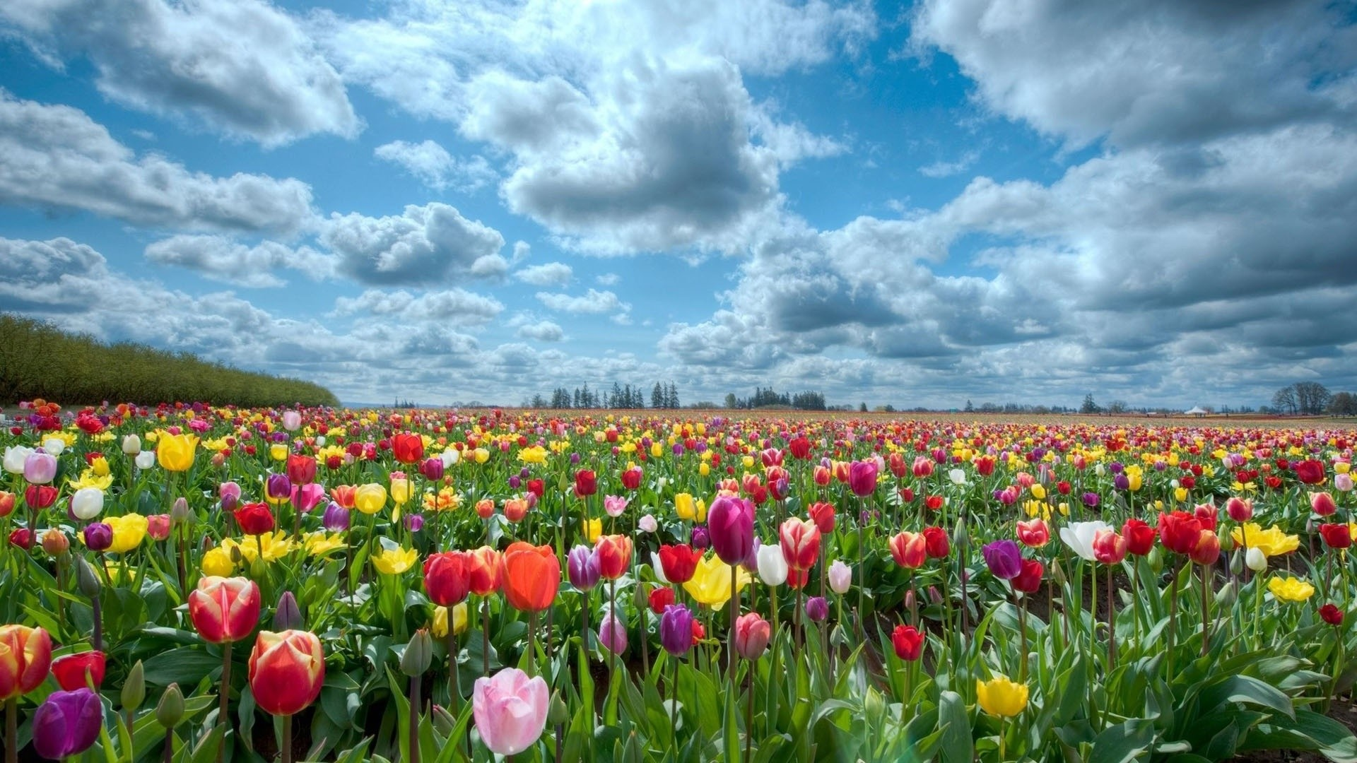 Res: 1920x1080, HD wallpapers field of flowers background